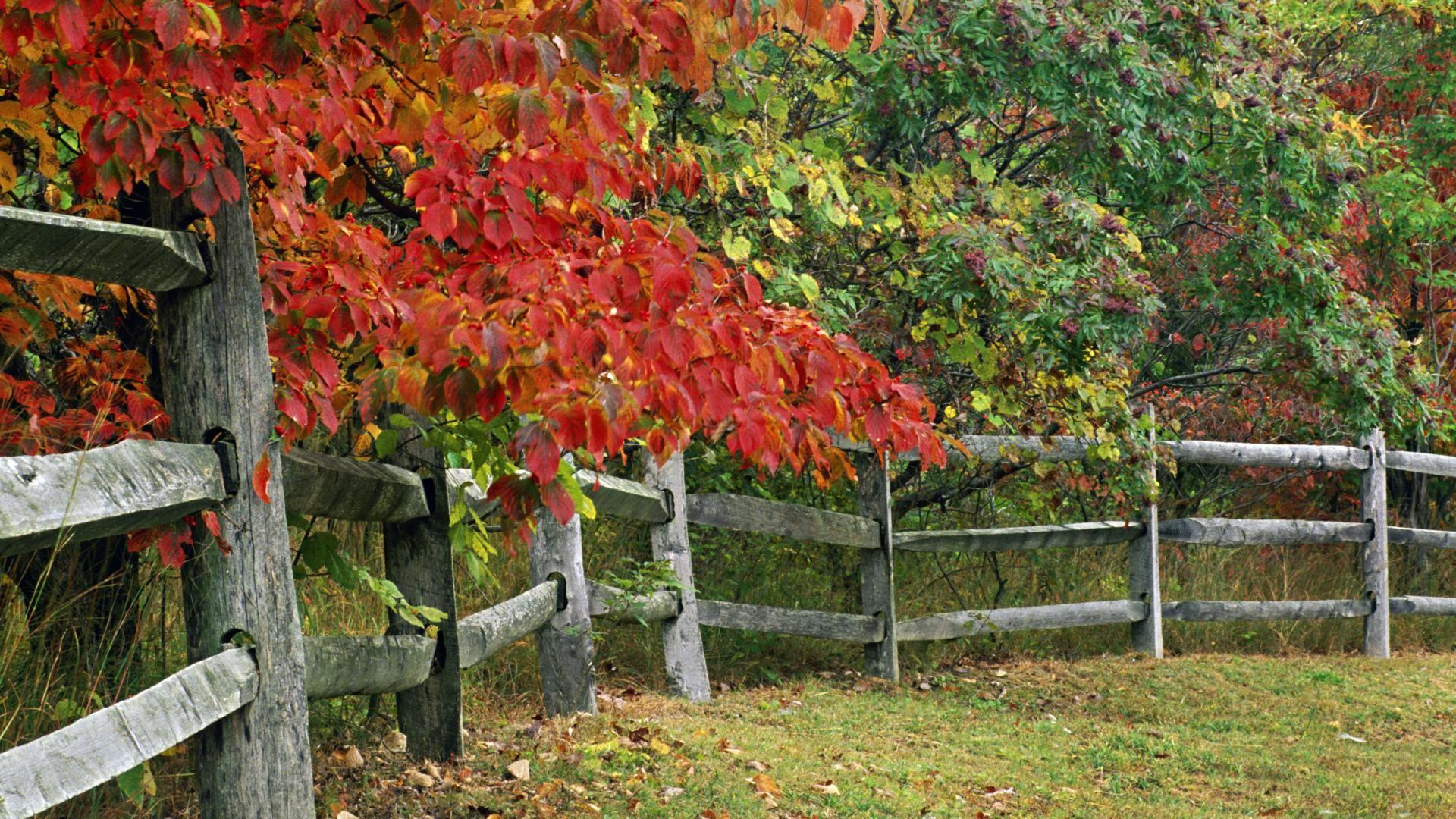 Autumn, park, indiana, state, county, brown, fence, wallpaper ...