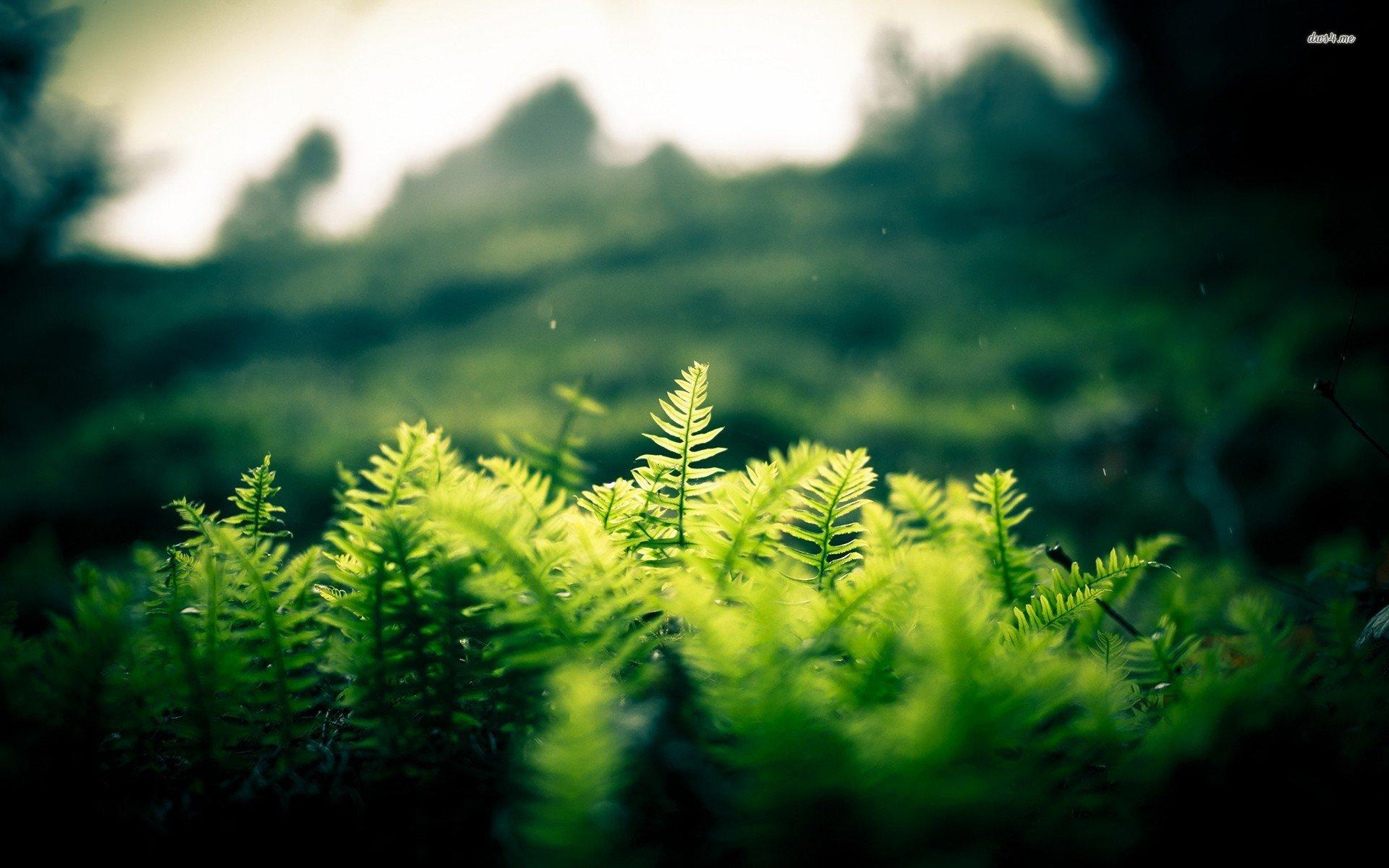 Fern Wallpapers Wallpaper Cave