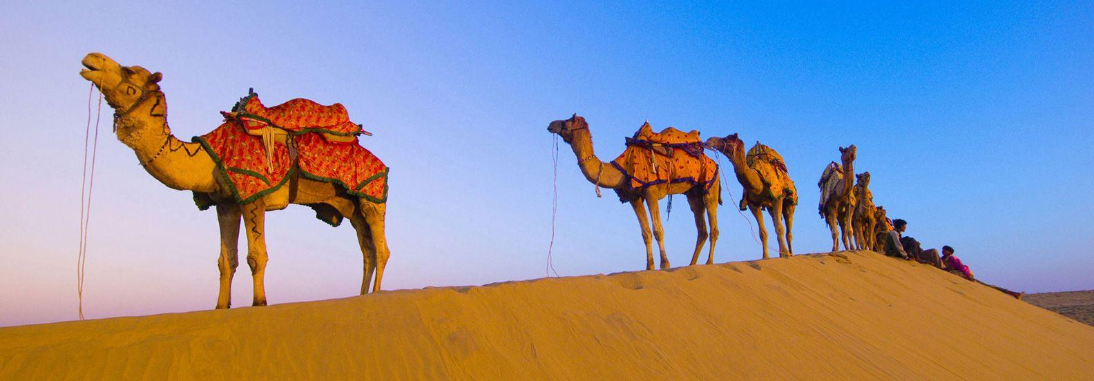 Pin by India Tour by Cabs on Rajasthan Tours - India Tour by Cabs ...
