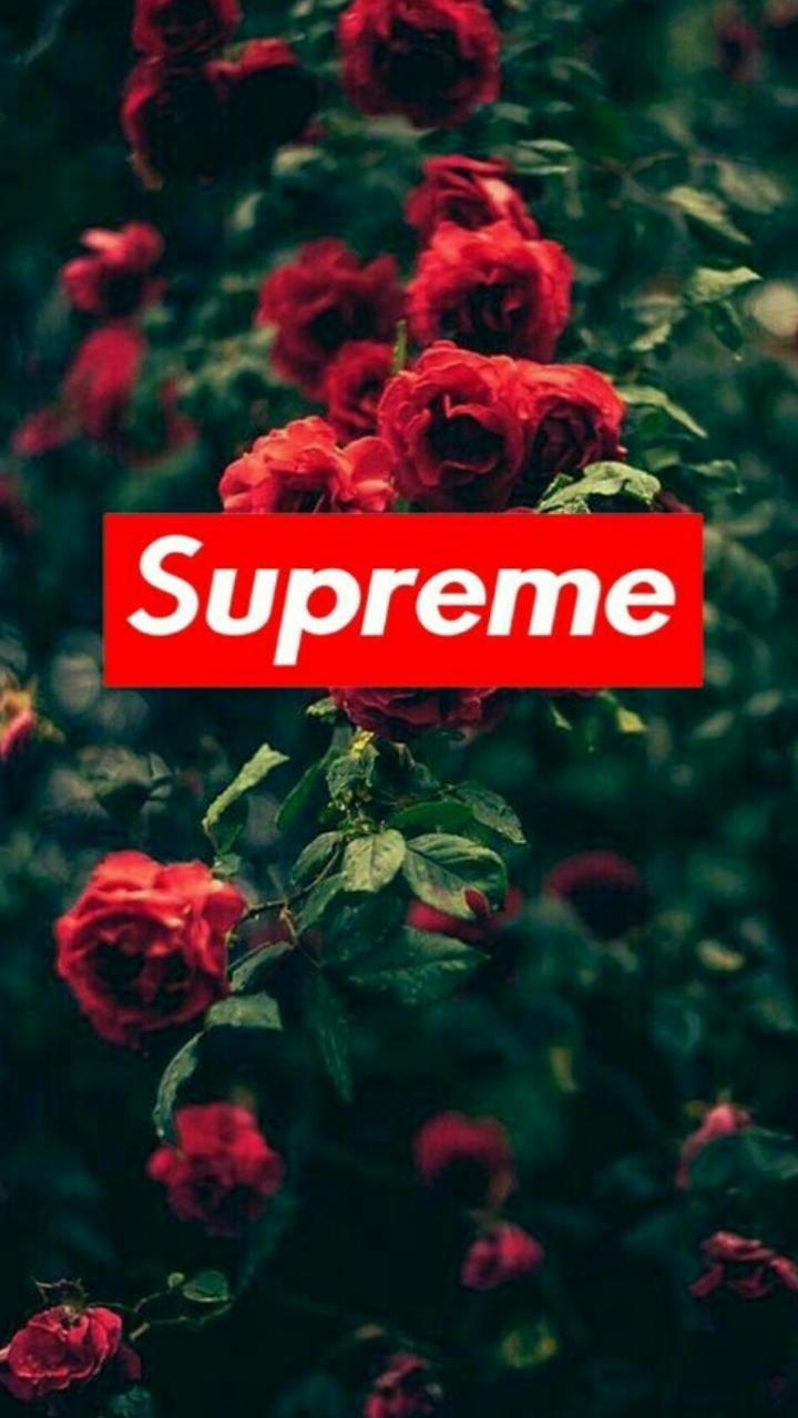 Supreme Rose Wallpapers Wallpaper Cave