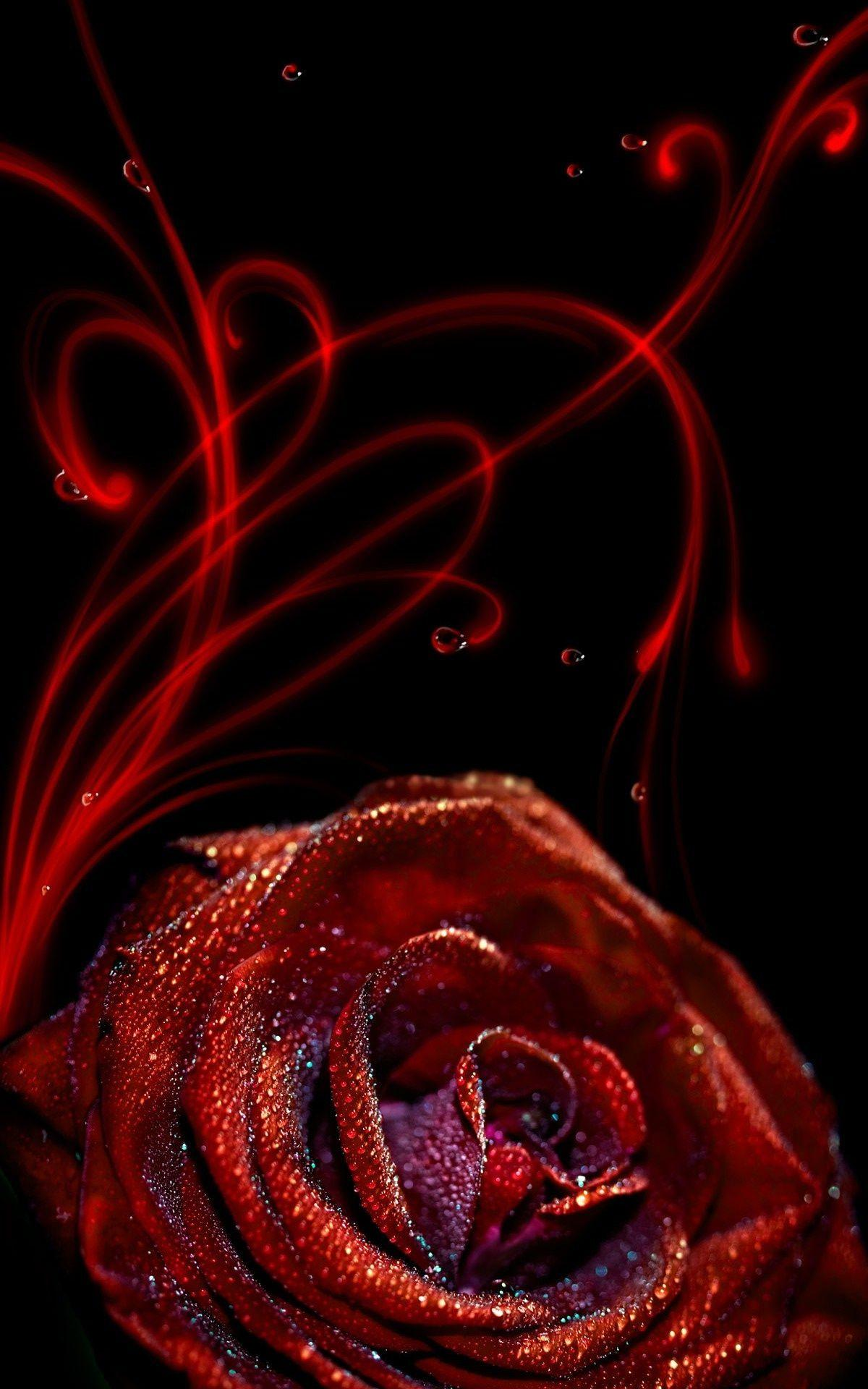 Rose Flower iPhone Wallpapers
