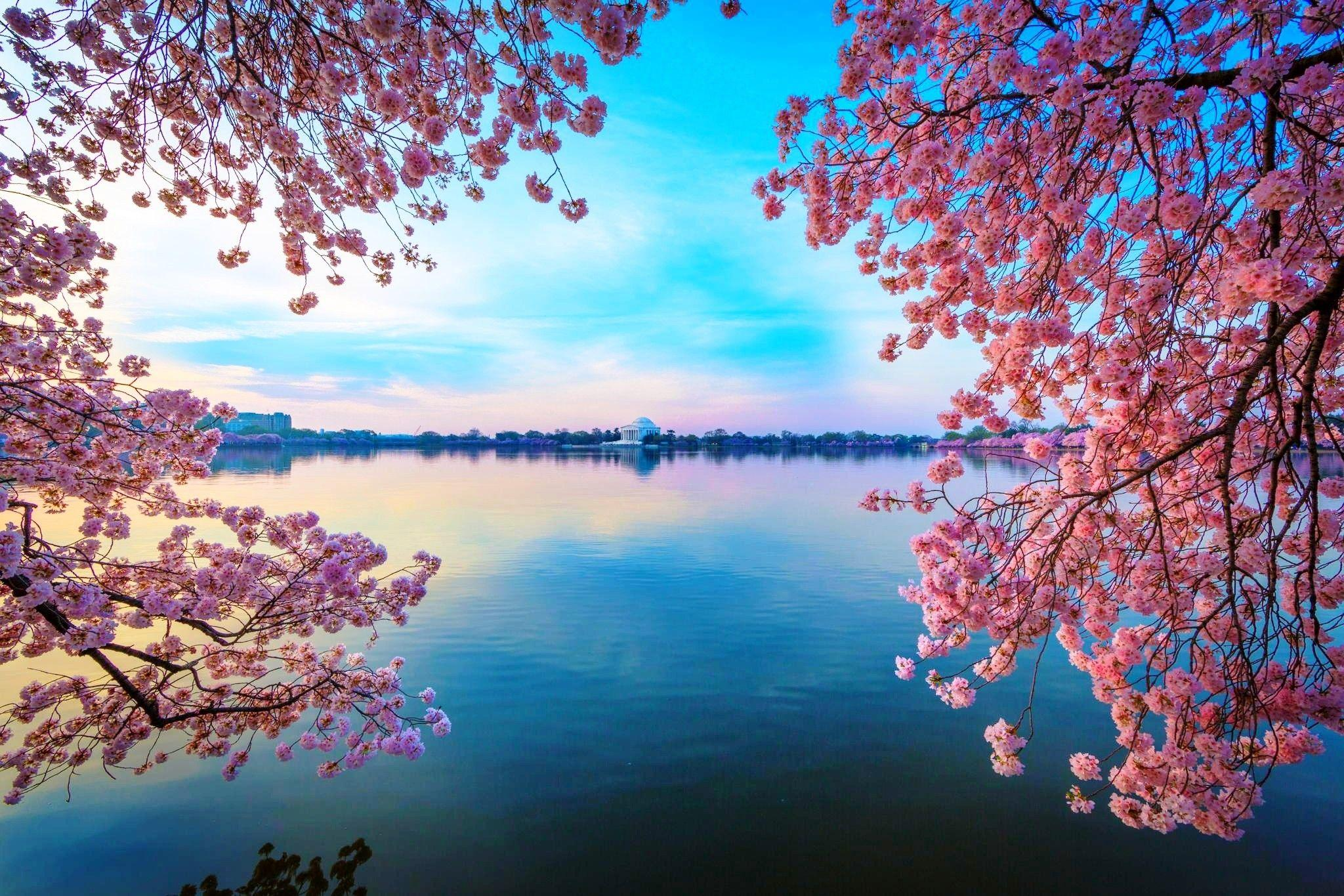 Pink Tree By Lake Wallpapers - Wallpaper Cave