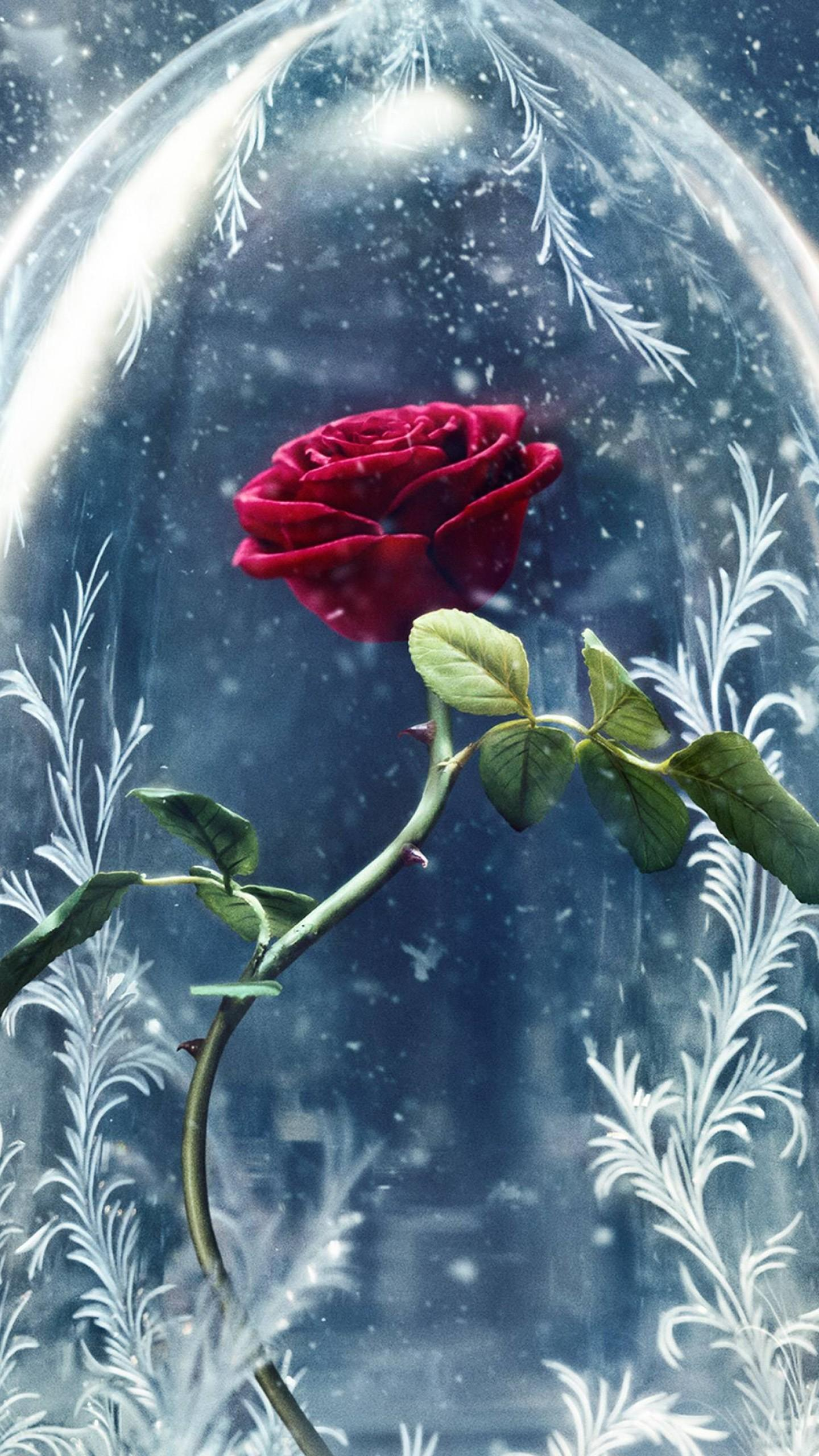 Beauty And The Beast Rose Wallpapers - Wallpaper Cave