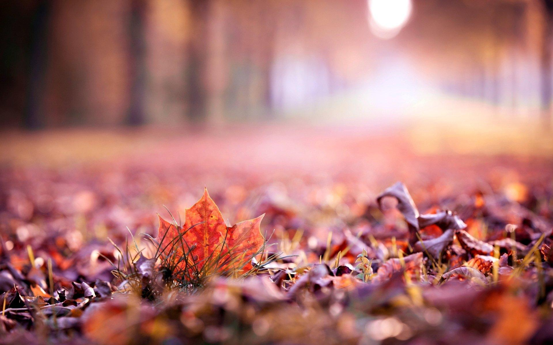 close up autumn leaves leaf leave macro blur beautiful wallpapers