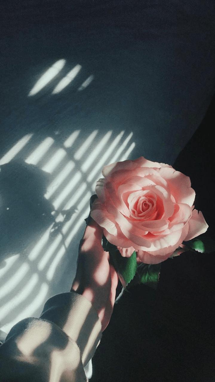 Download Wallpaper Aesthetic Flower Hd Cikimm Com