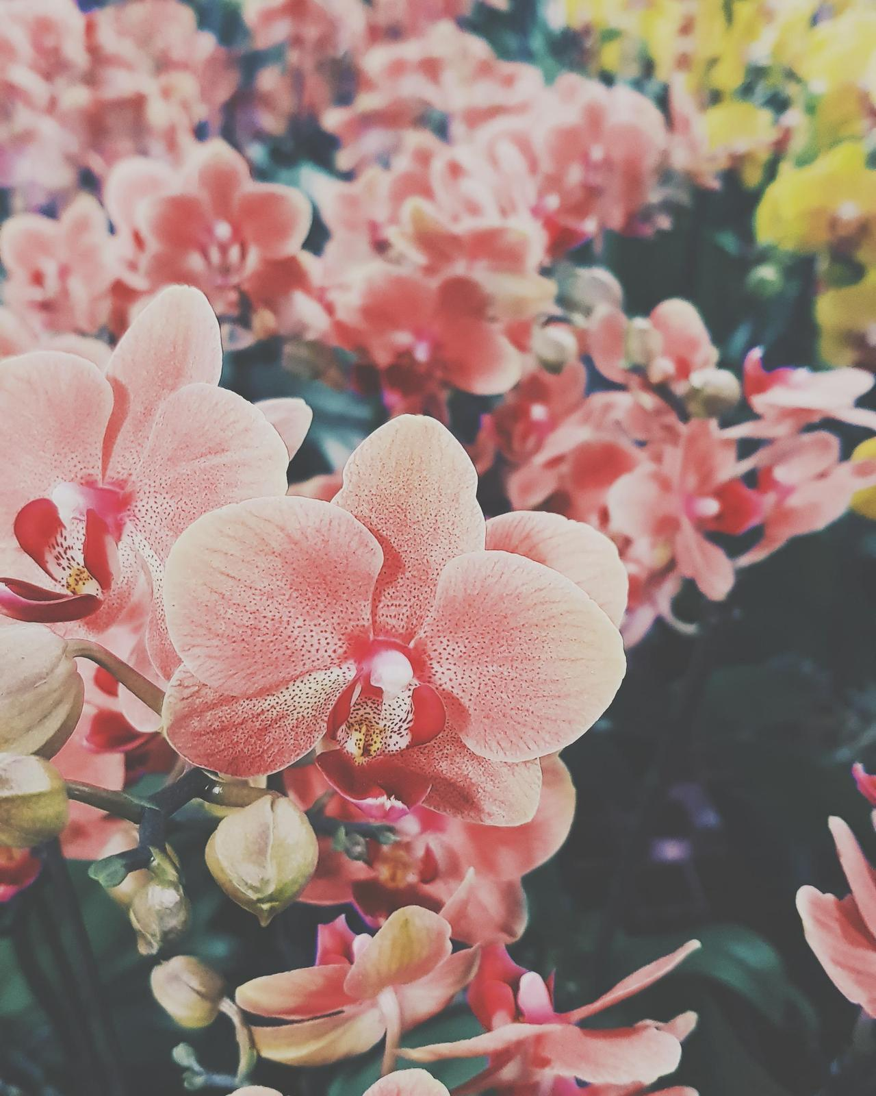 Aesthetic Flowers Wallpapers - Wallpaper Cave