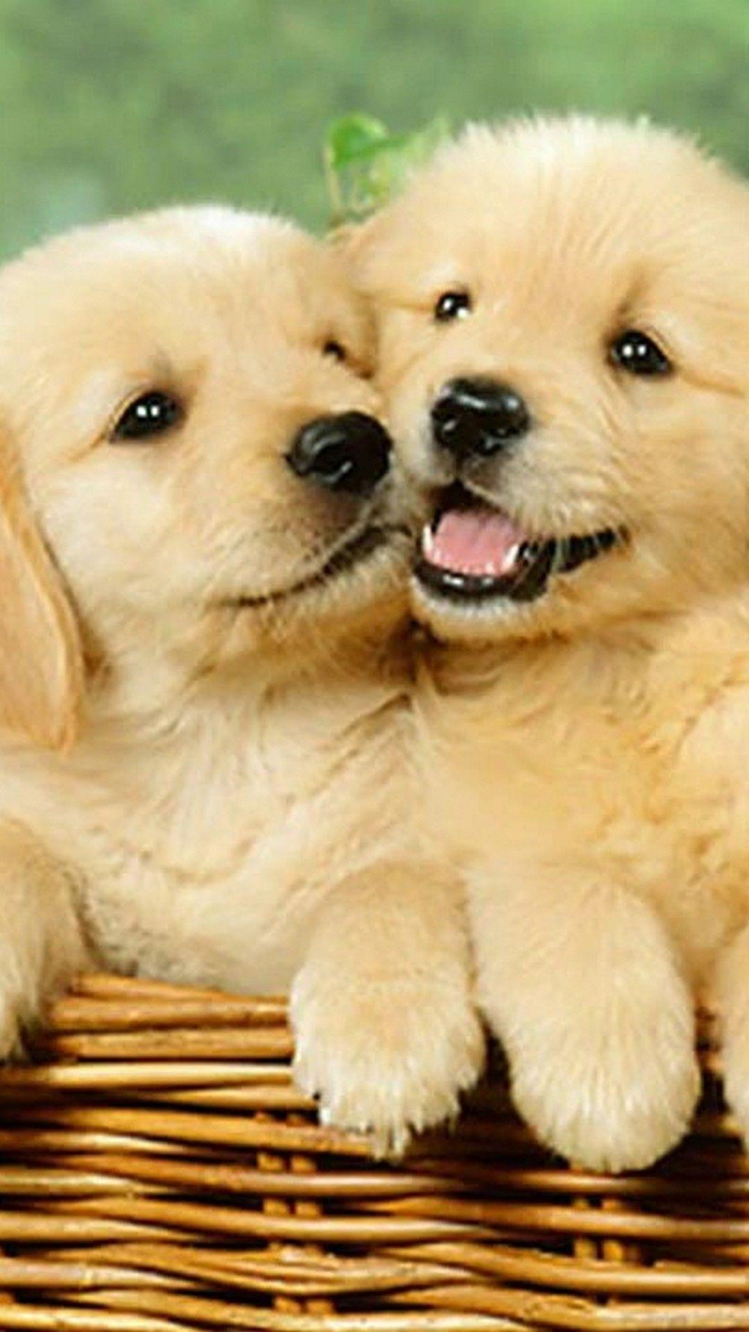 Cute Puppies Phone Wallpapers Wallpaper Cave
