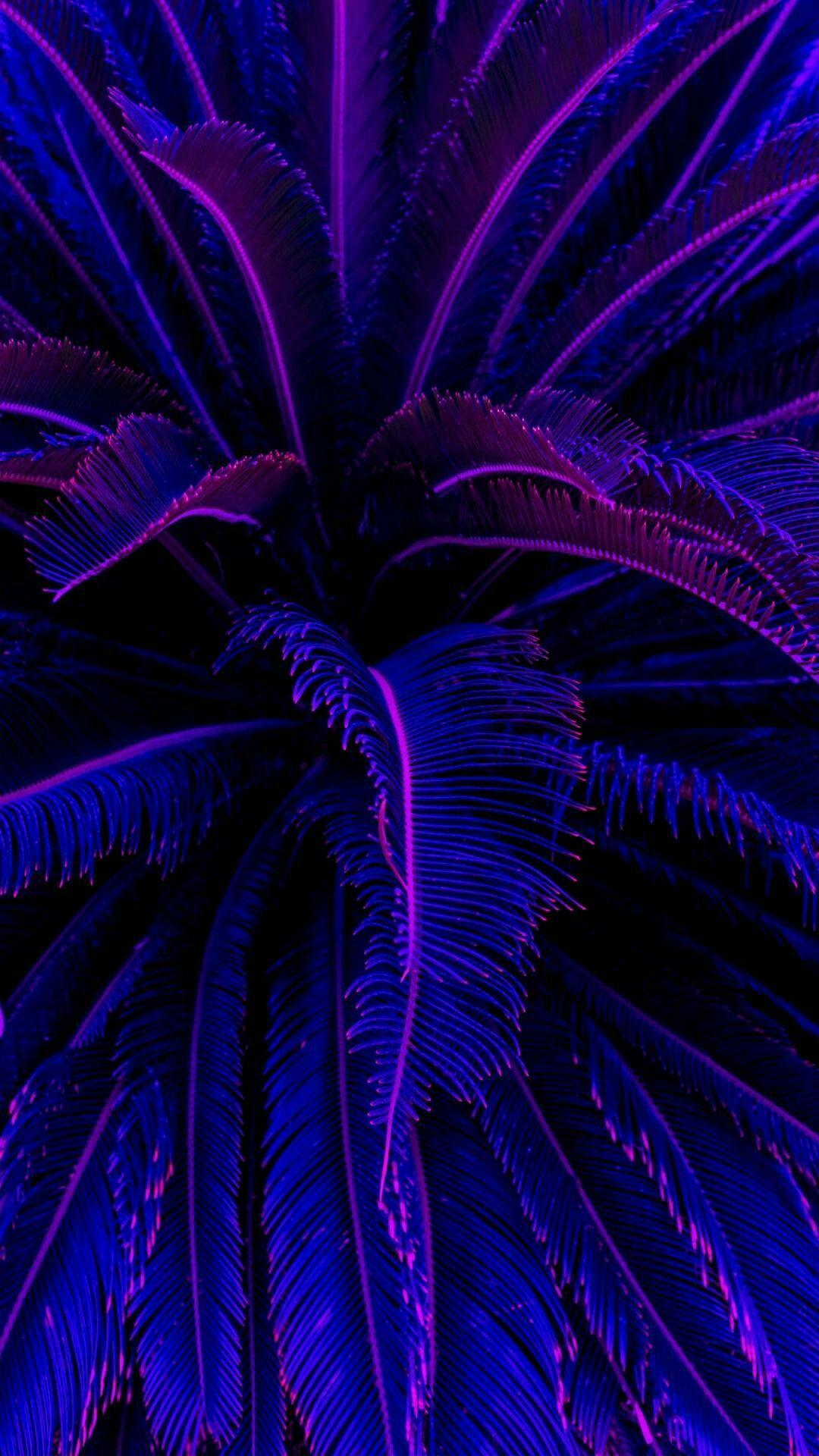 Purple Aesthetic Wallpapers - Wallpaper Cave