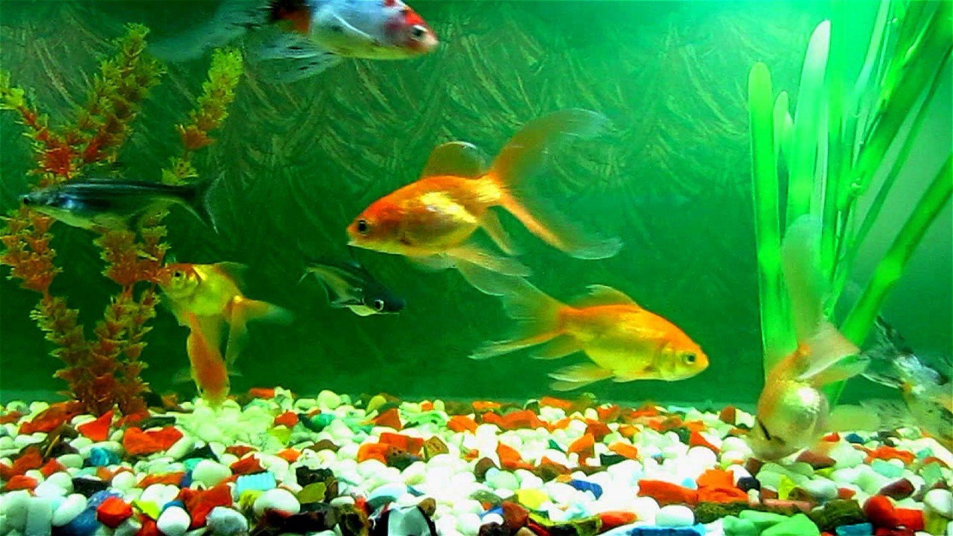 Fish Aquarium Wallpapers Wallpaper Cave