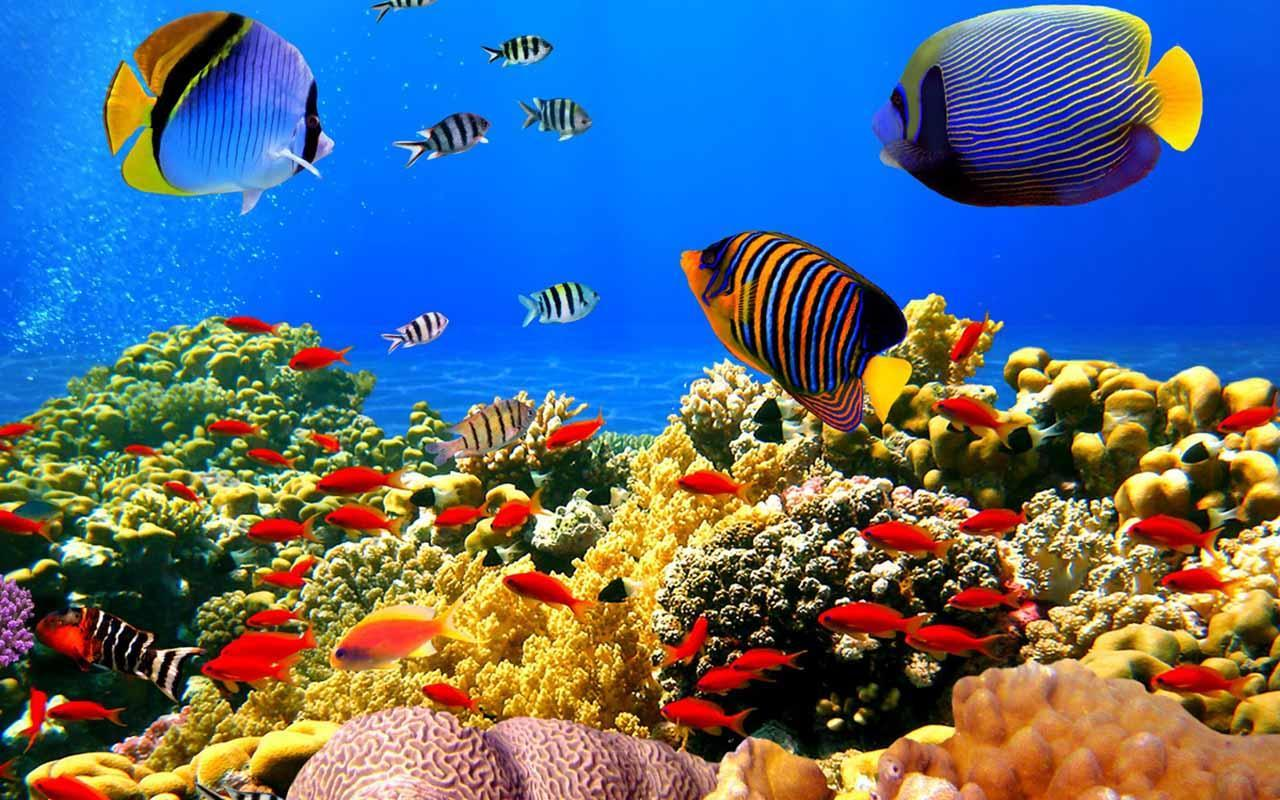 Fish Aquarium Wallpapers Wallpaper Cave