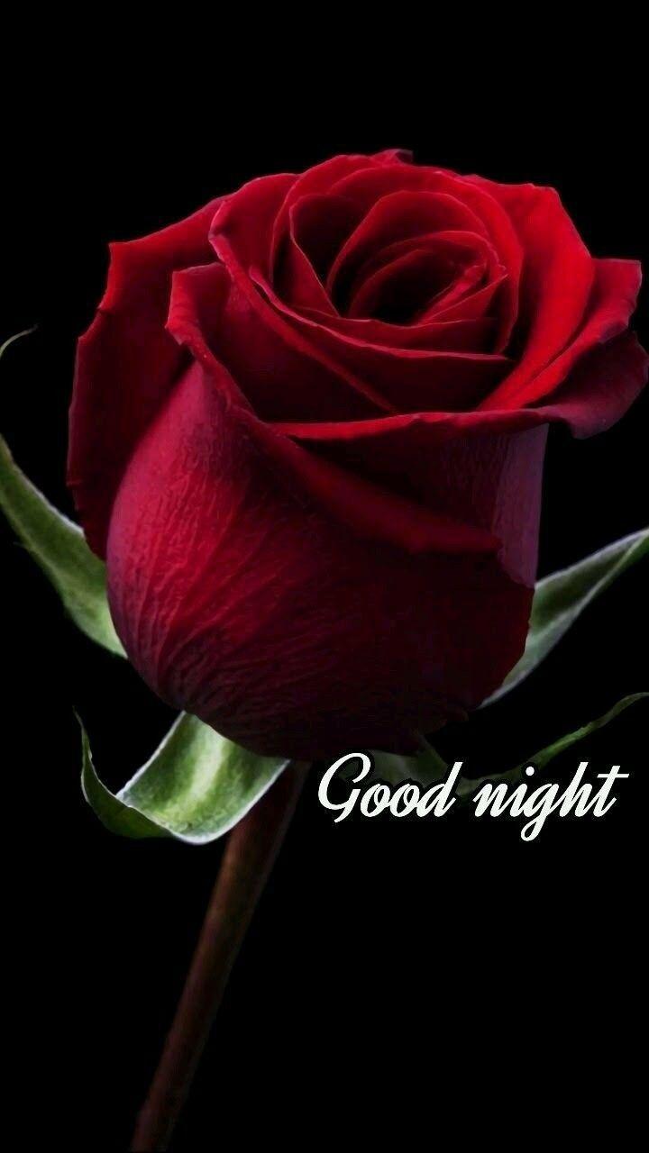 Rose Good Night Wallpapers Wallpaper Cave
