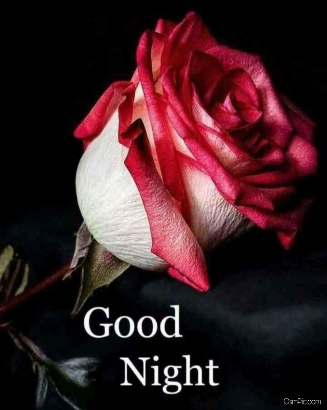 Good Night Images With Red Rose Flowers - Flowers Healthy