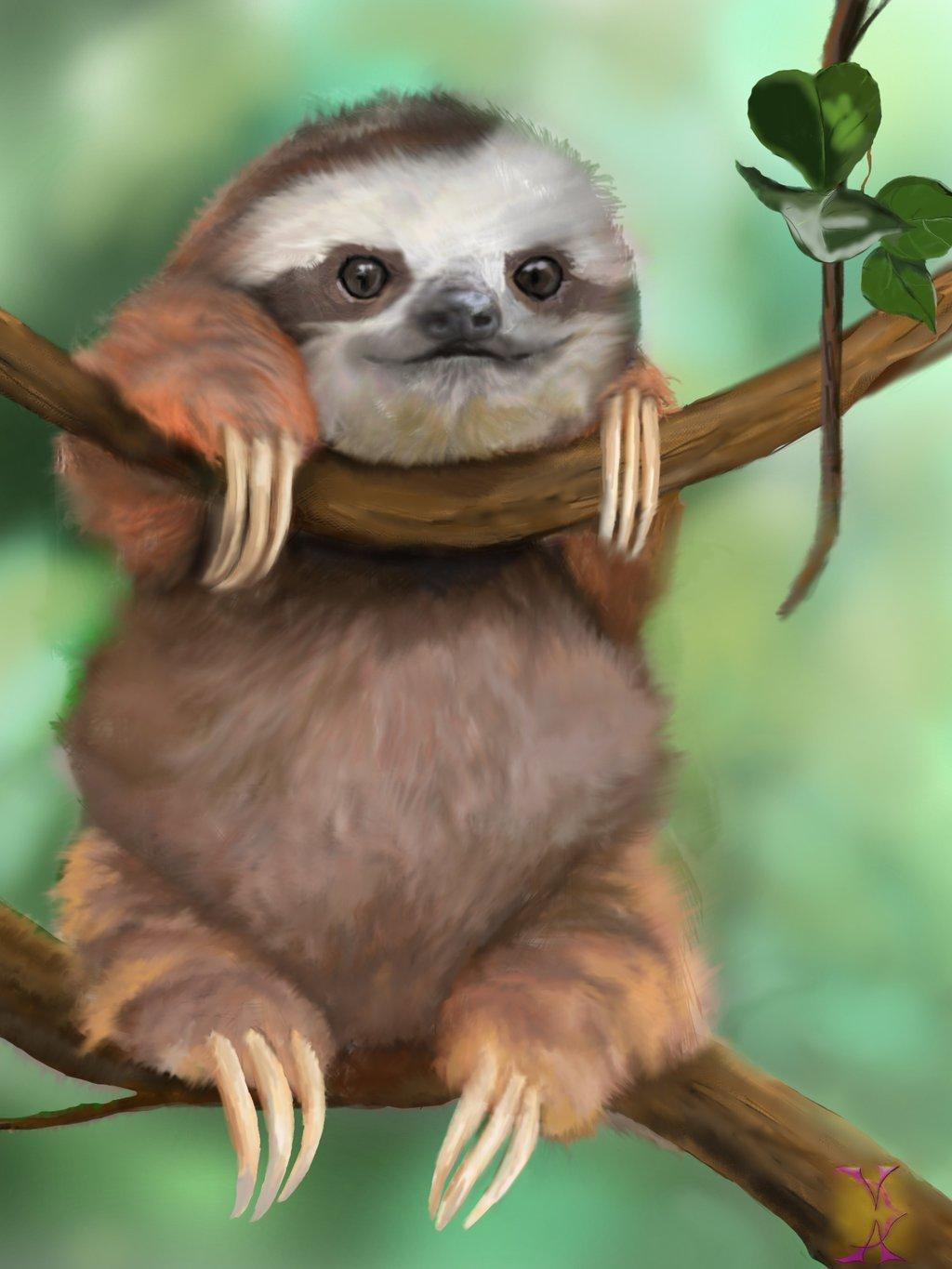Baby Sloths Wallpapers Wallpaper Cave