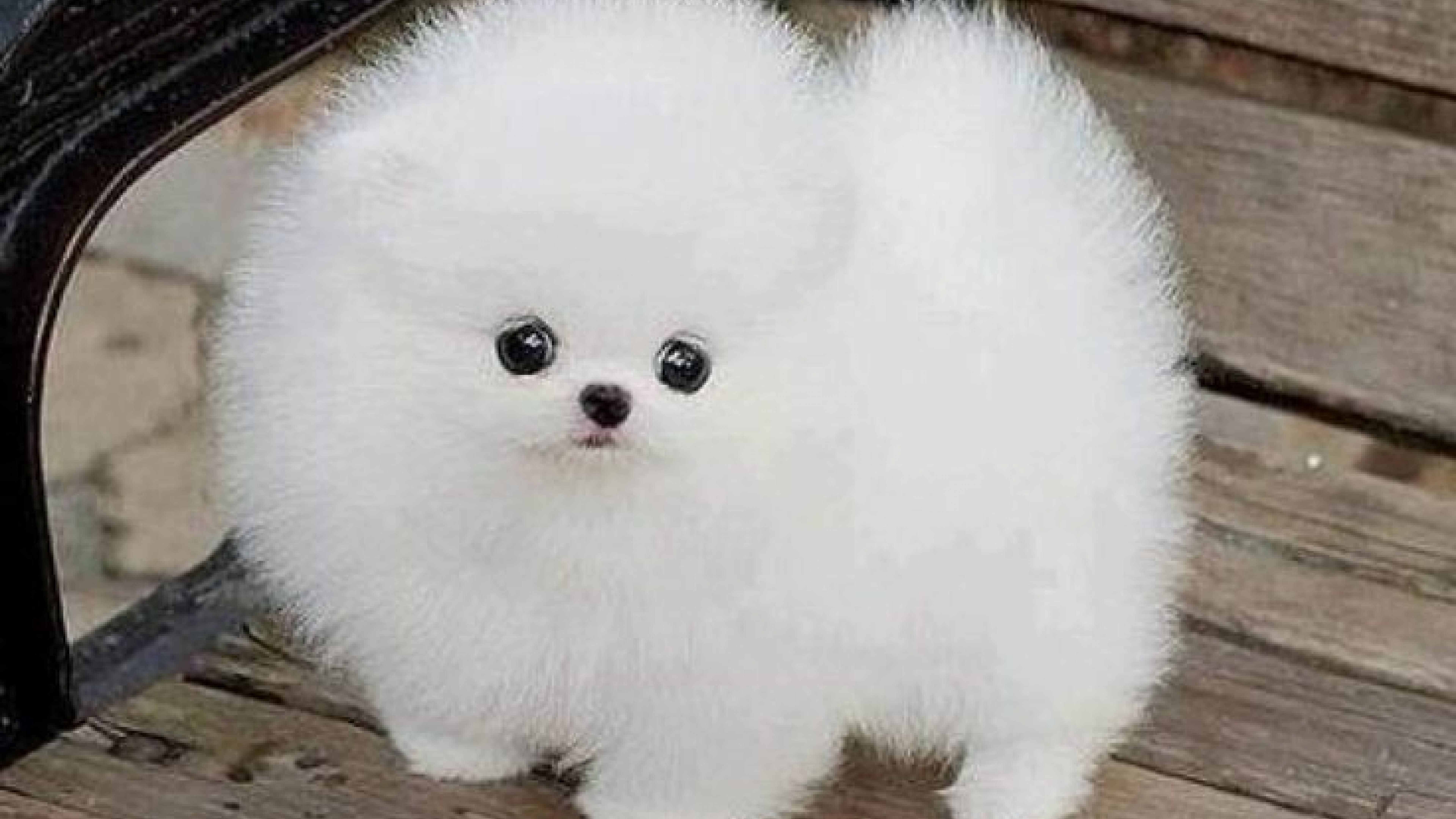 Cute Baby Dogs Wallpapers Wallpaper Cave