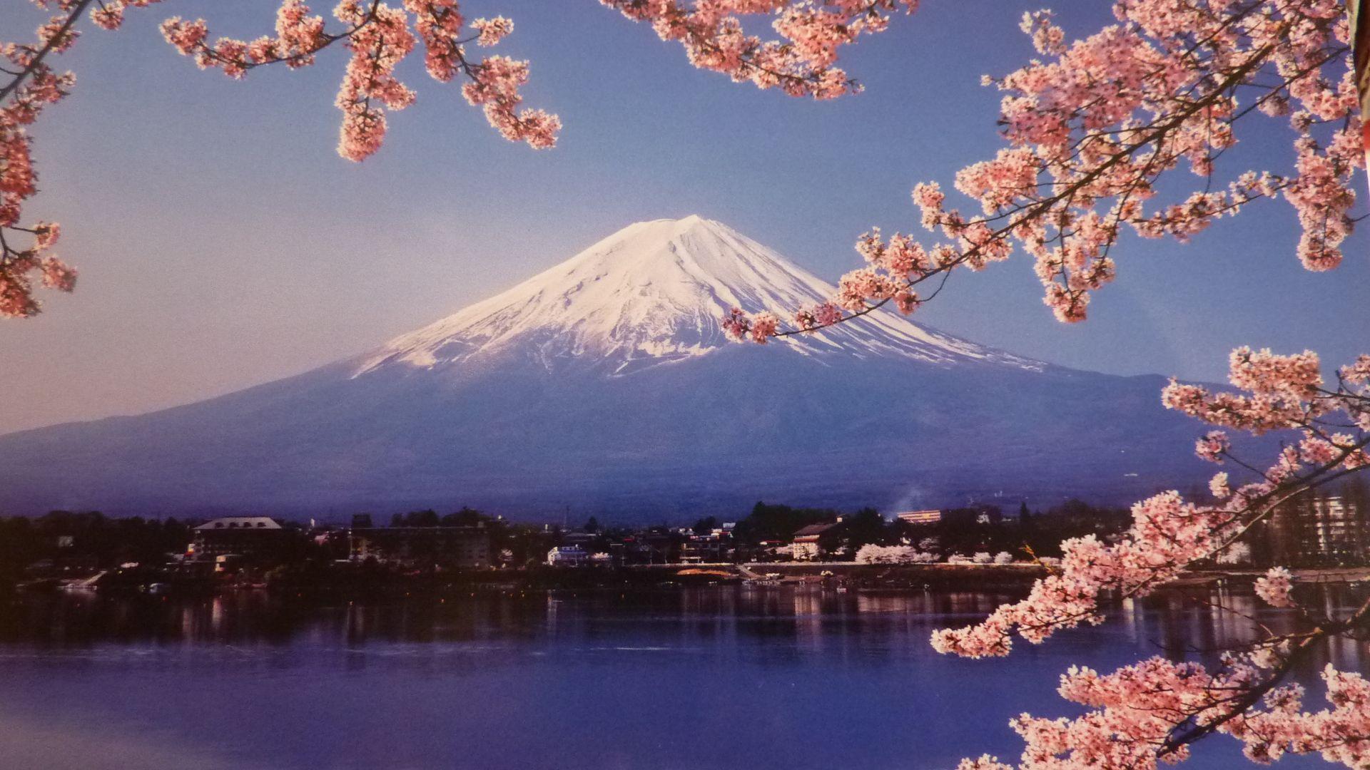 Spring Flower Garden Mount Fuji Lake Kawaguchi Wallpapers