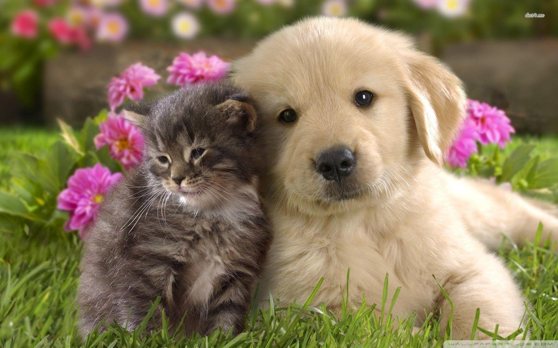 Animal Friends Wallpapers - Wallpaper Cave