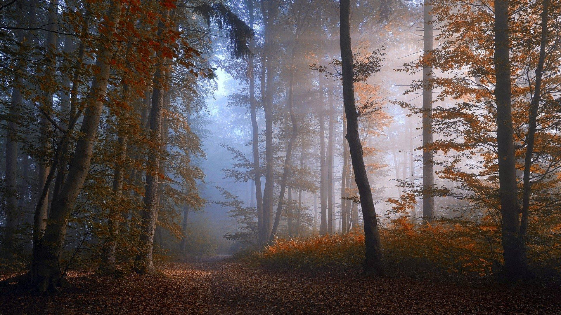 Misty Autumn Forest Wallpapers Wallpaper Cave