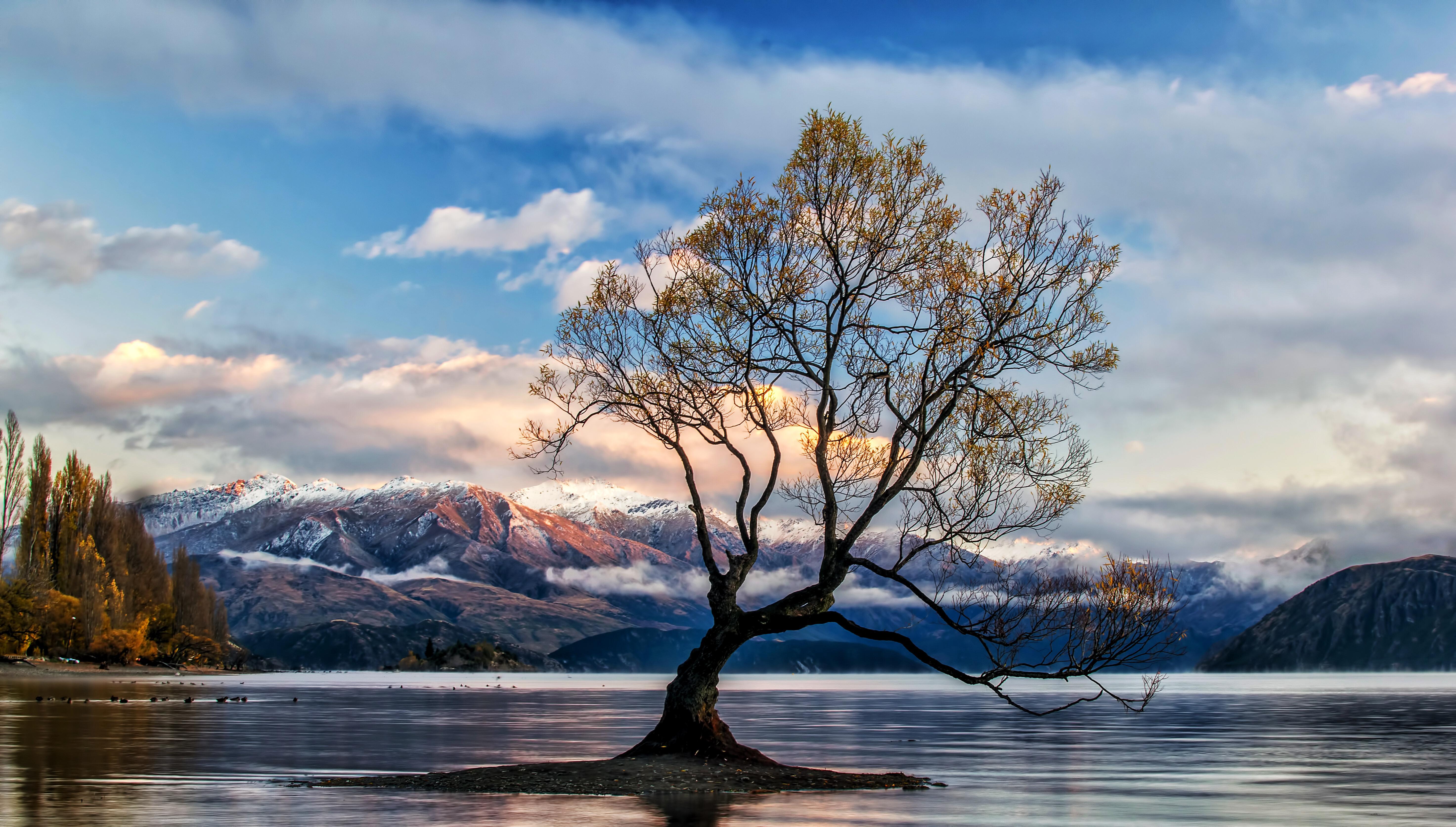 Tree On Lake Wallpapers Wallpaper Cave Hd wallpaper lake tree trunk mountain