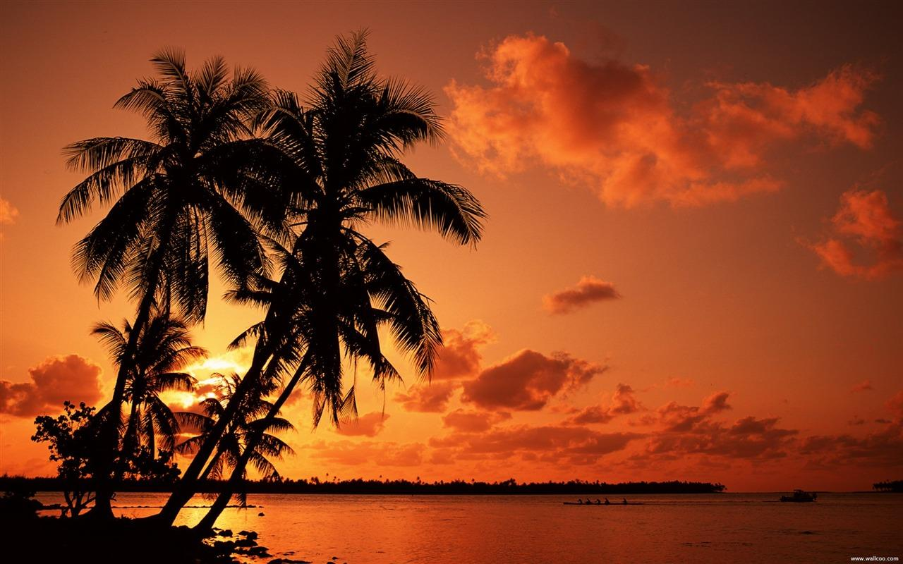 Tropical Sunset Wallpapers Wallpaper Cave