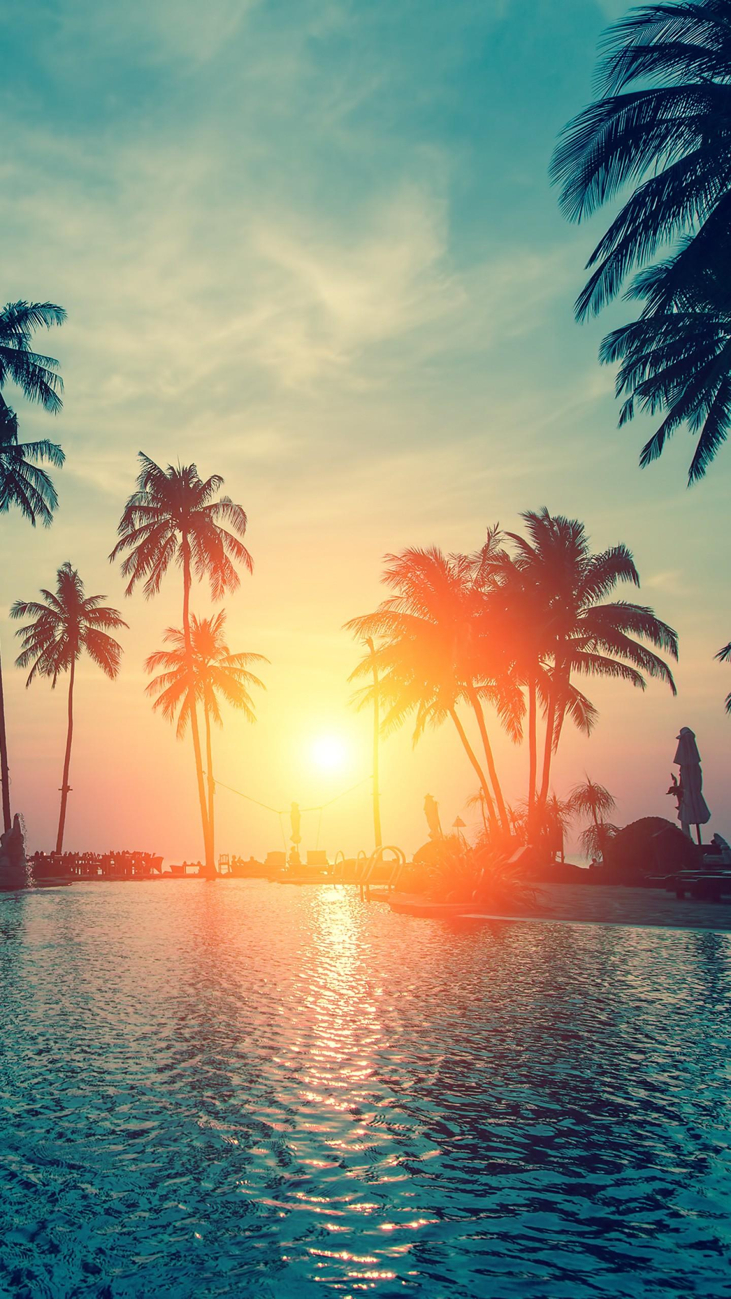 Sunset Palm Tree Wallpapers - Wallpaper Cave