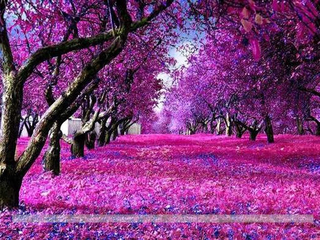 nature wallpapers purple pink beauty path backgrounds hd screensavers desktop landscape epic imagens