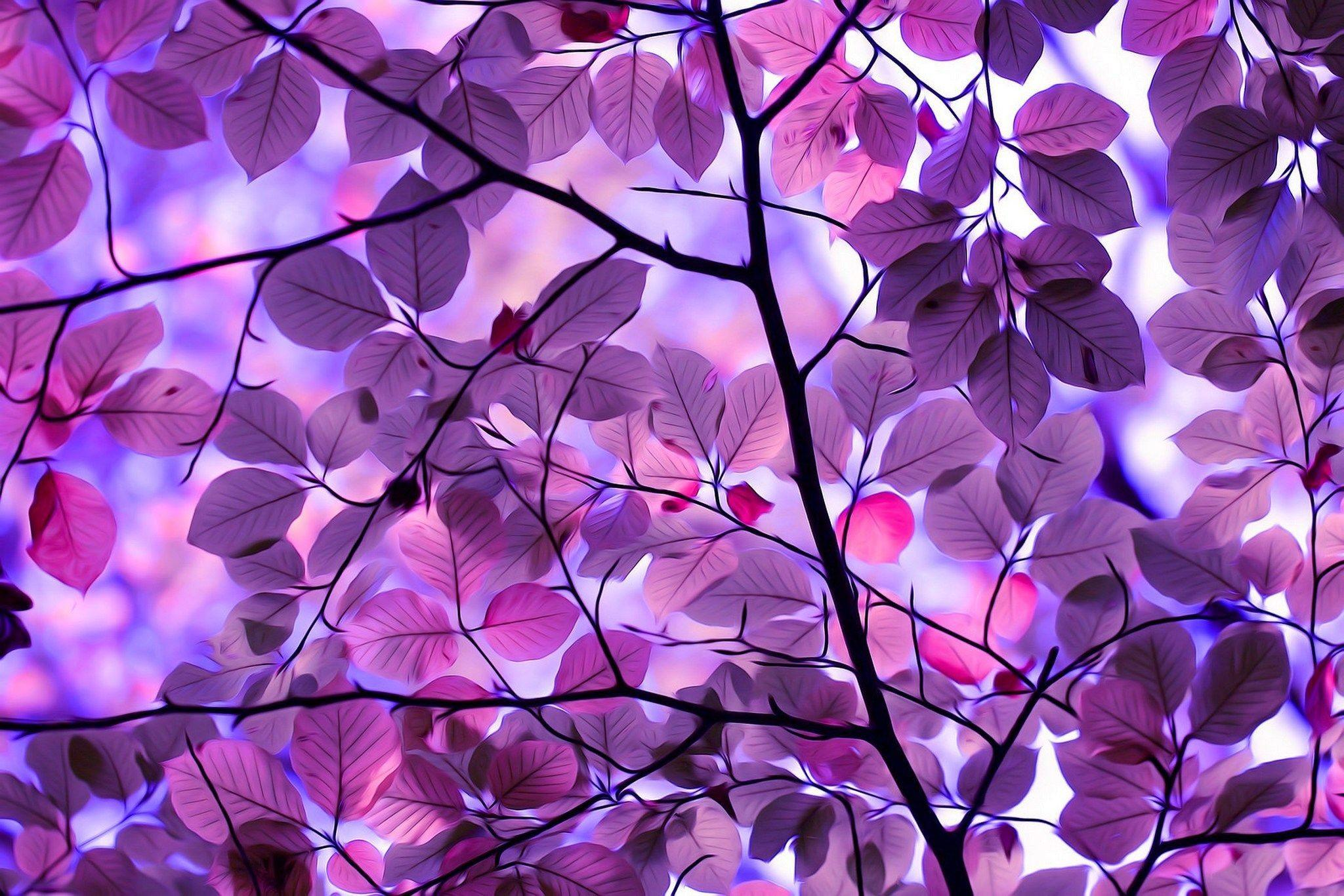 purple wallpapers beauty nature