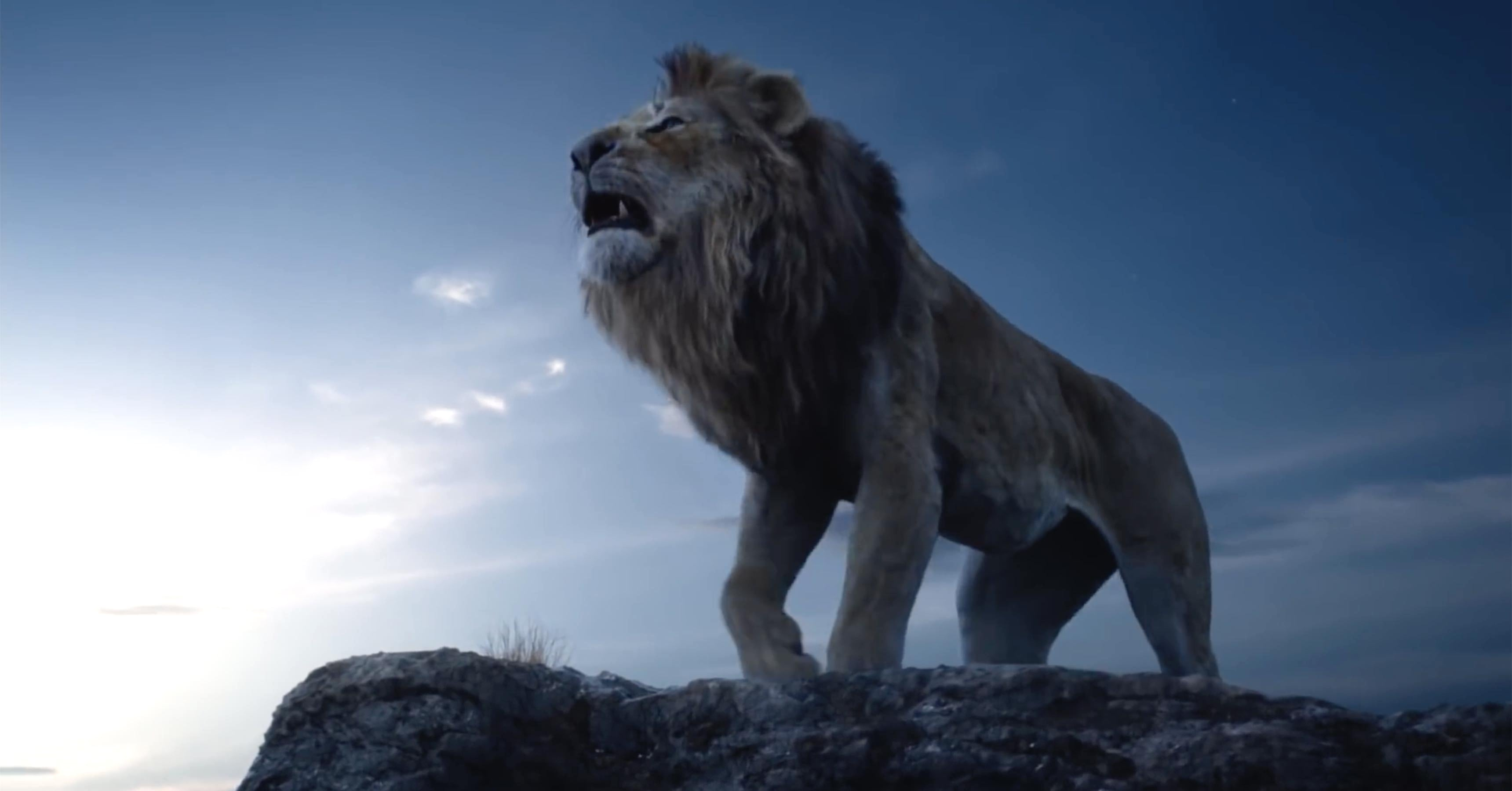 Lion King Hd Wallpapers 2019
