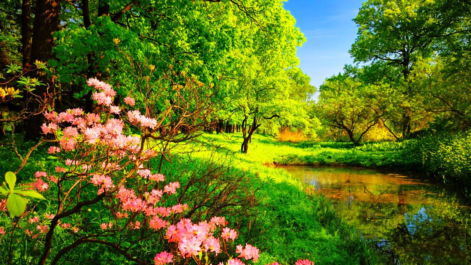 Group of Wallpapers Trees Flowers Forest