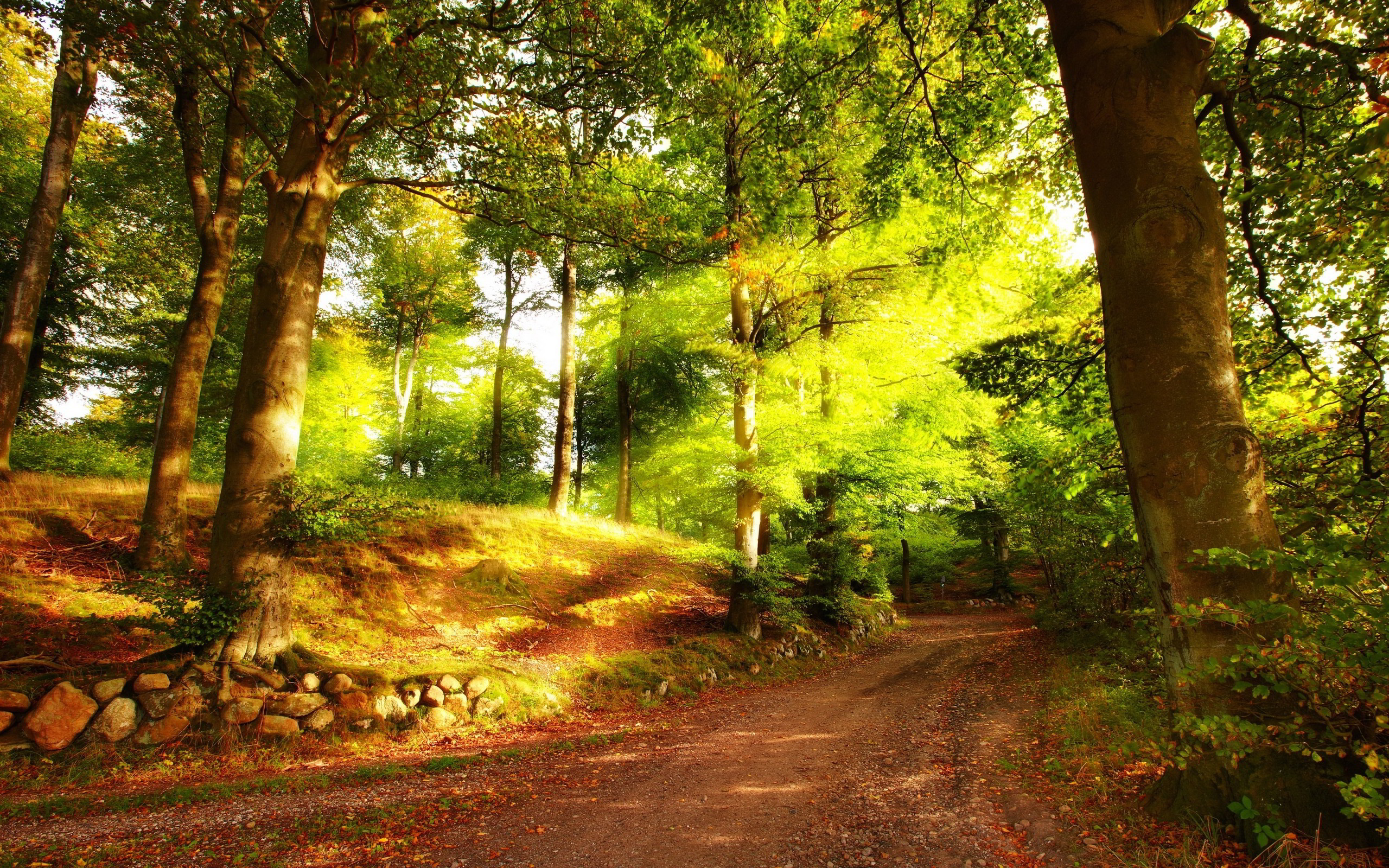 Bright Forest Wallpapers - Wallpaper Cave