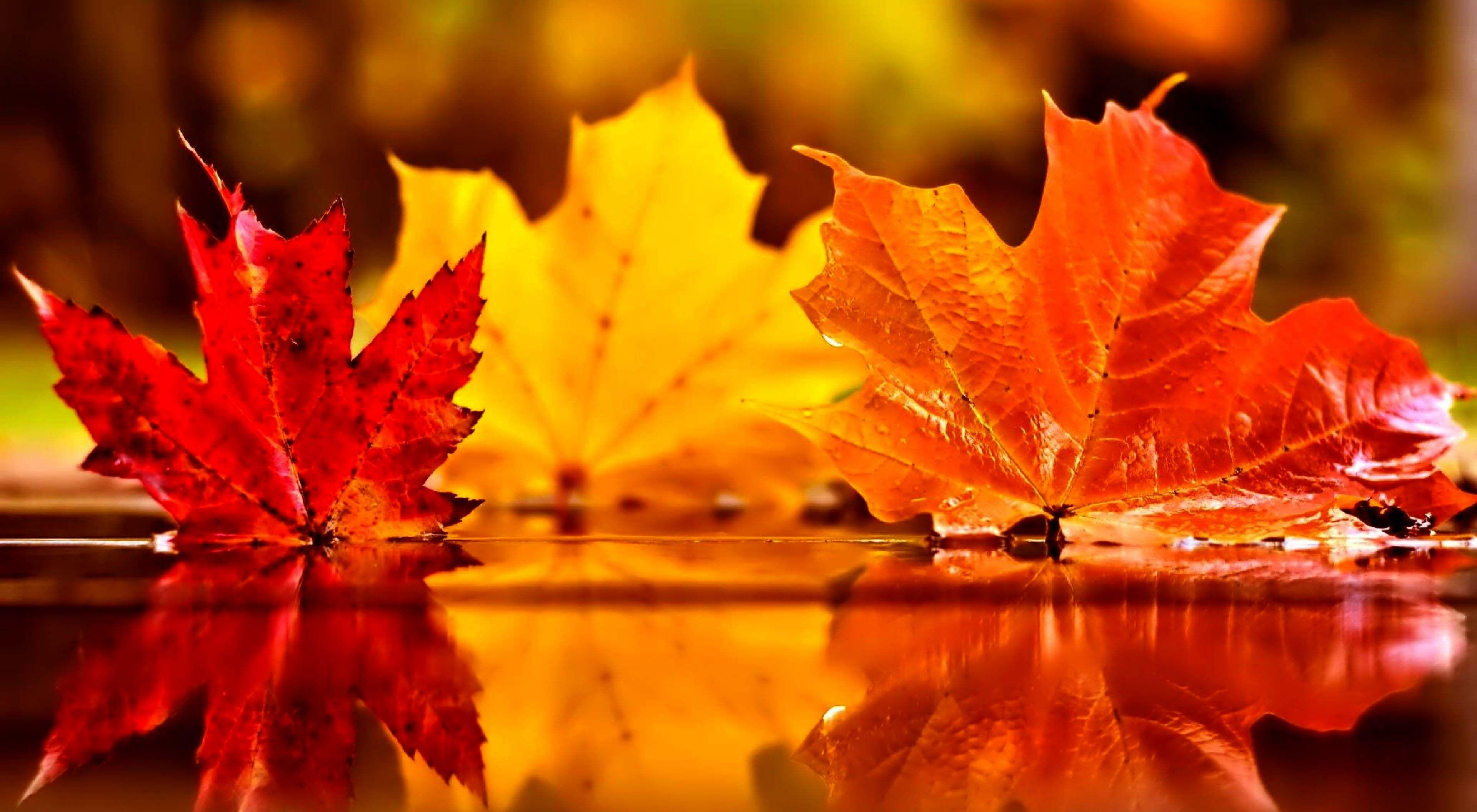 Autumn Foliage Wallpapers Wallpaper Cave