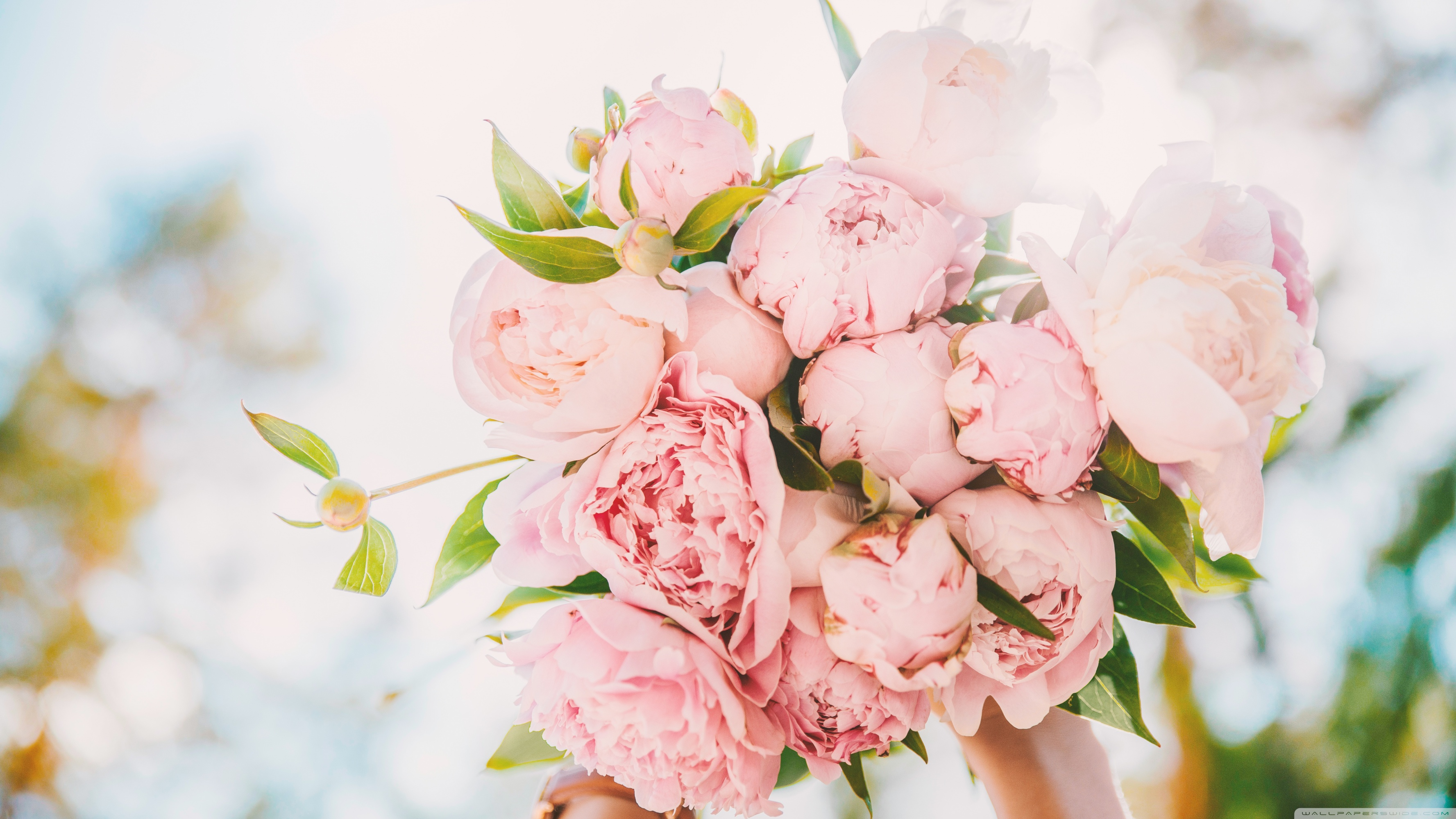Light Pink Peonies Bouquet Wallpapers Wallpaper Cave