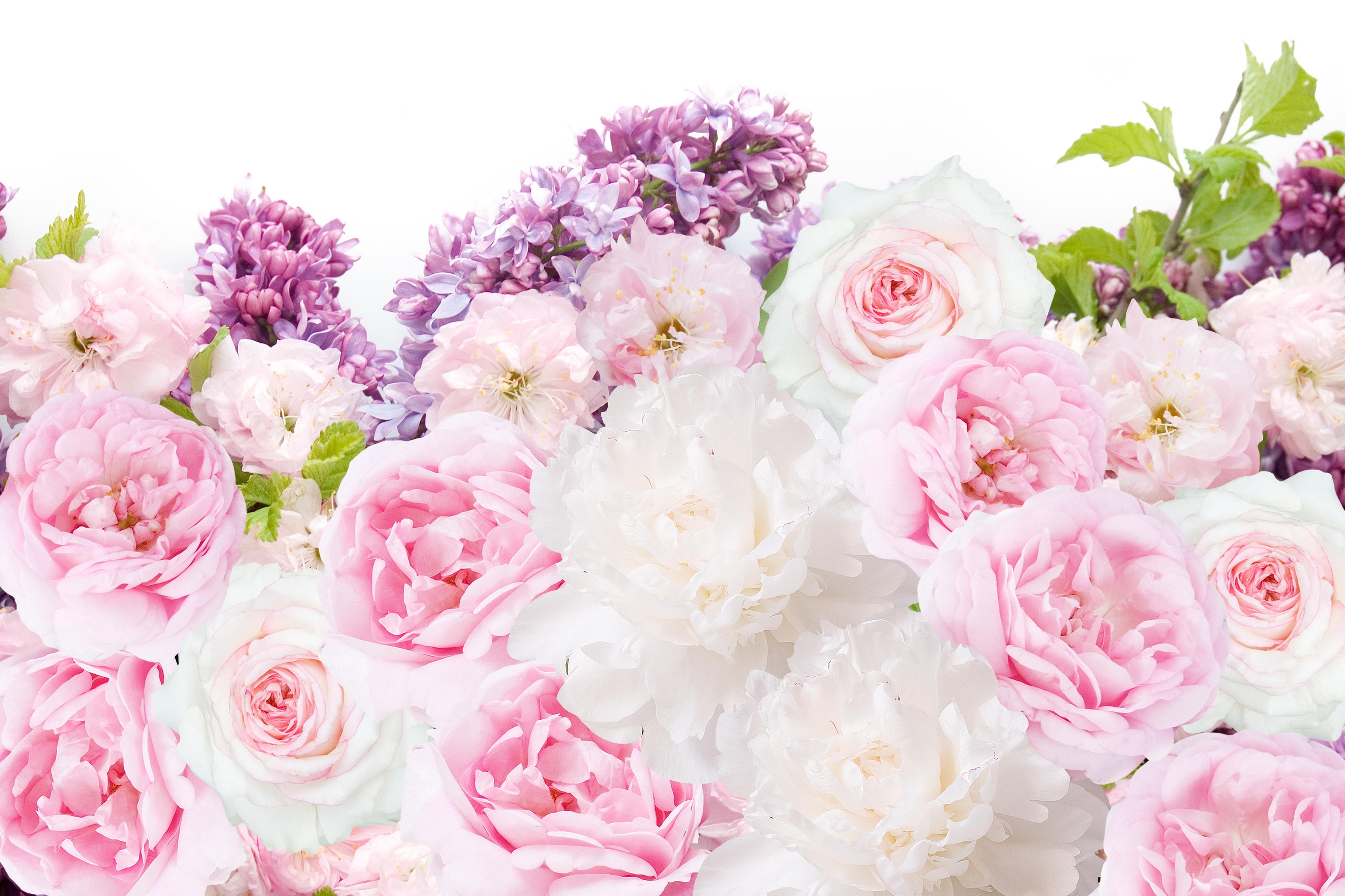 Light Pink Peonies Bouquet Wallpapers - Wallpaper Cave