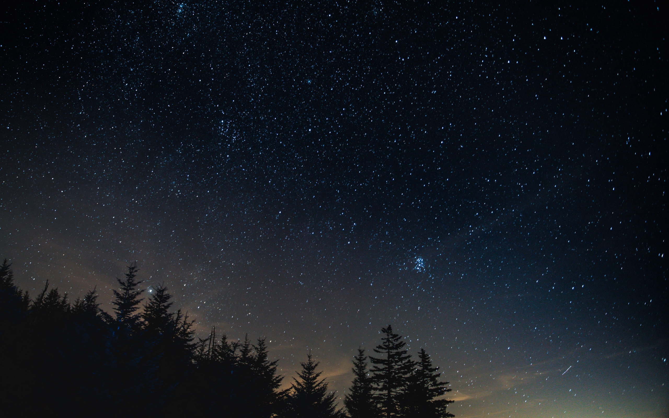Download wallpapers 2560x1600 starry sky, night, trees, night