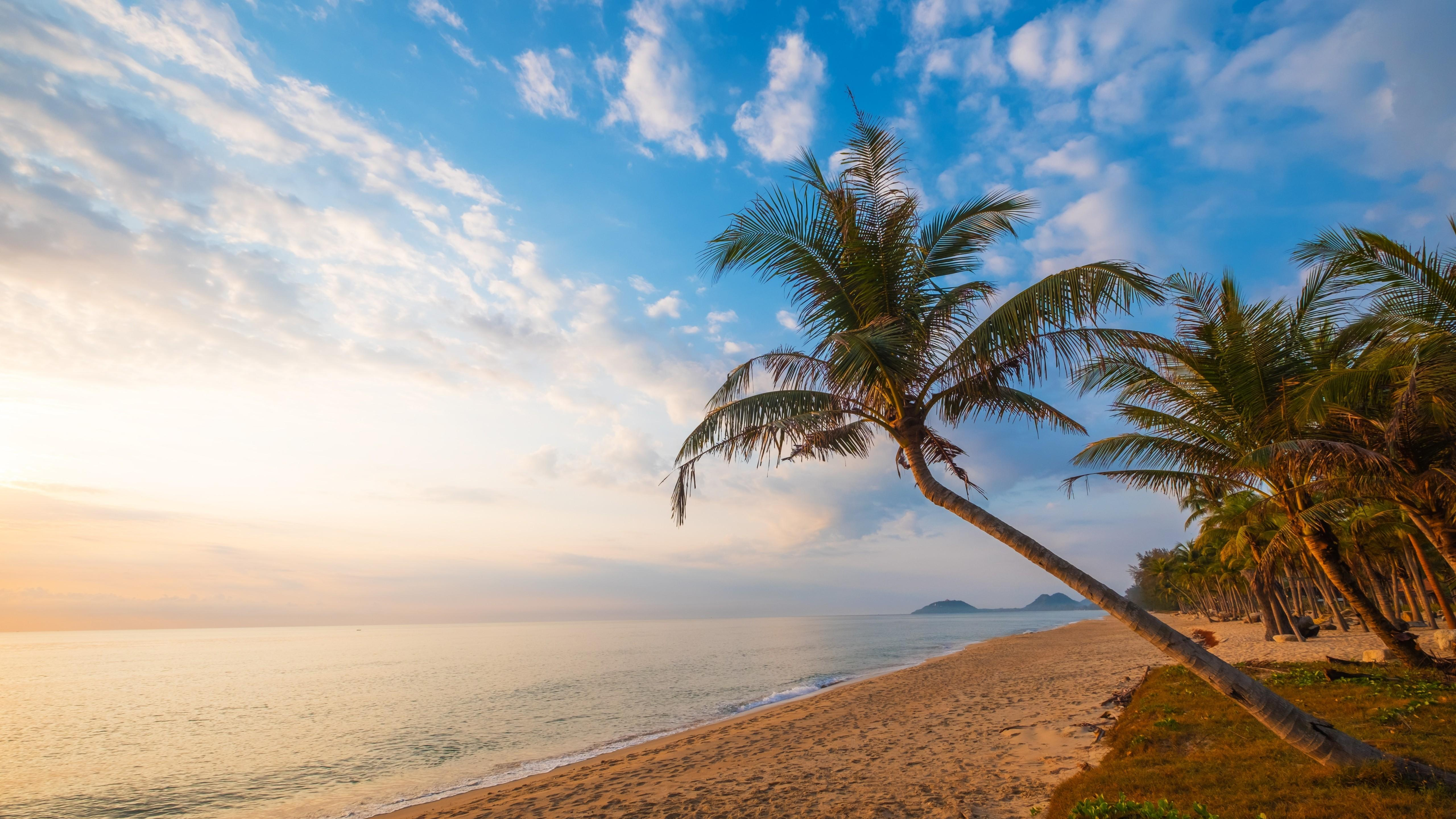 Download 5120x2880 Beach, Horizon, Ocean, Palm Tree Wallpapers
