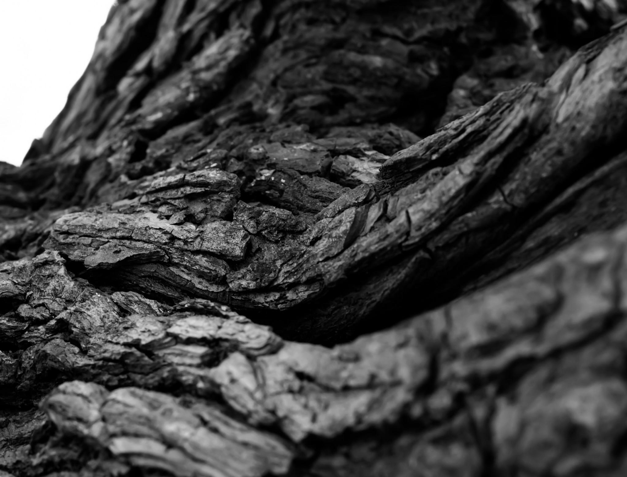 Download 2048x1556 Tree Bark, Root, Monochrome Wallpapers