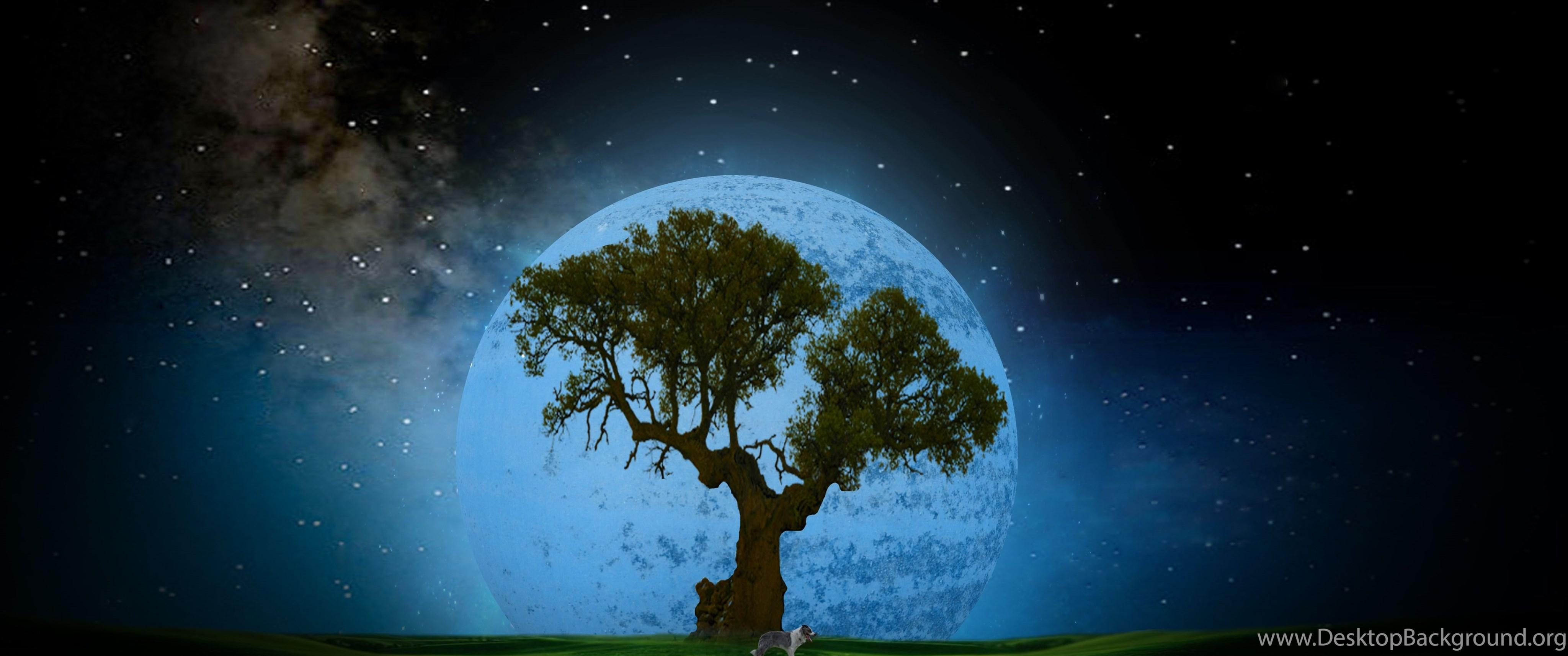 Tree At Night Desktop HD Wallpapers 4469 Amazing Wallpaperz Desktop