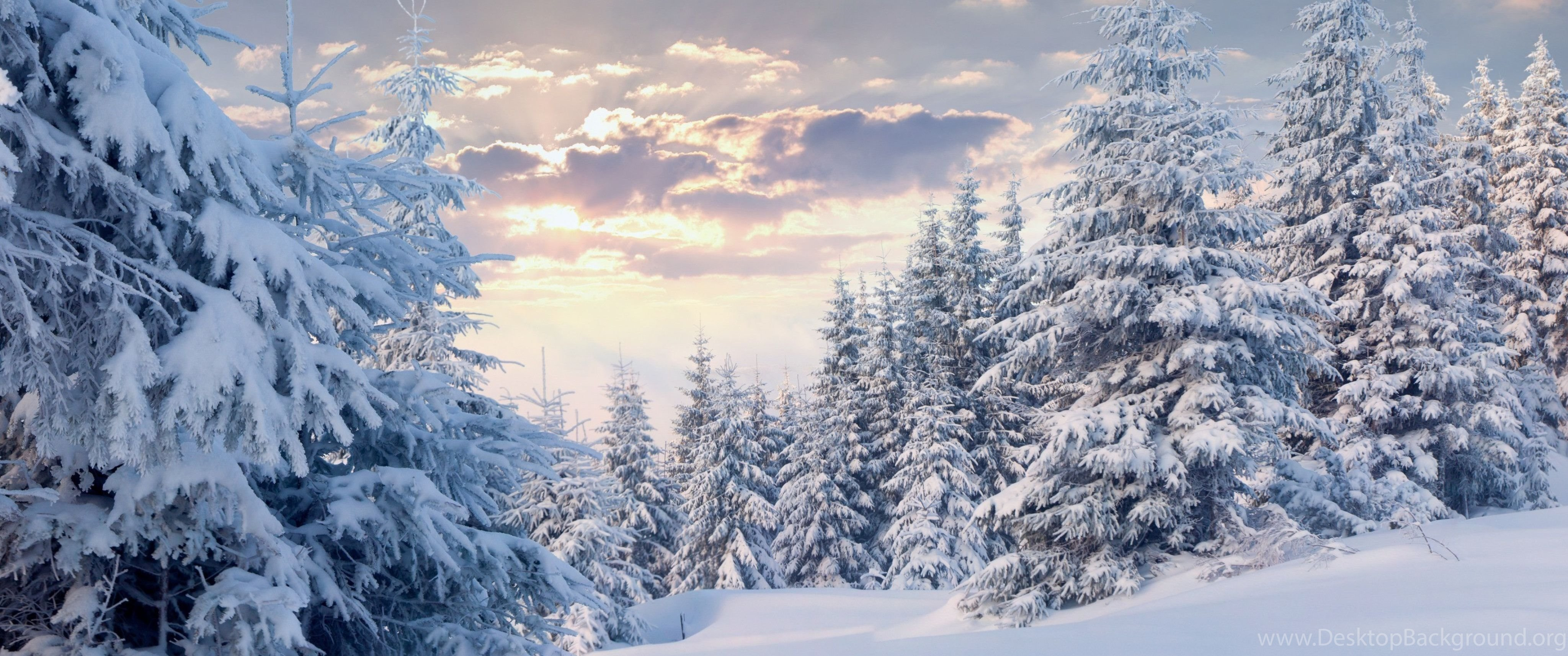 Winter Forest With Snow Wallpapers Wallpapers 4K