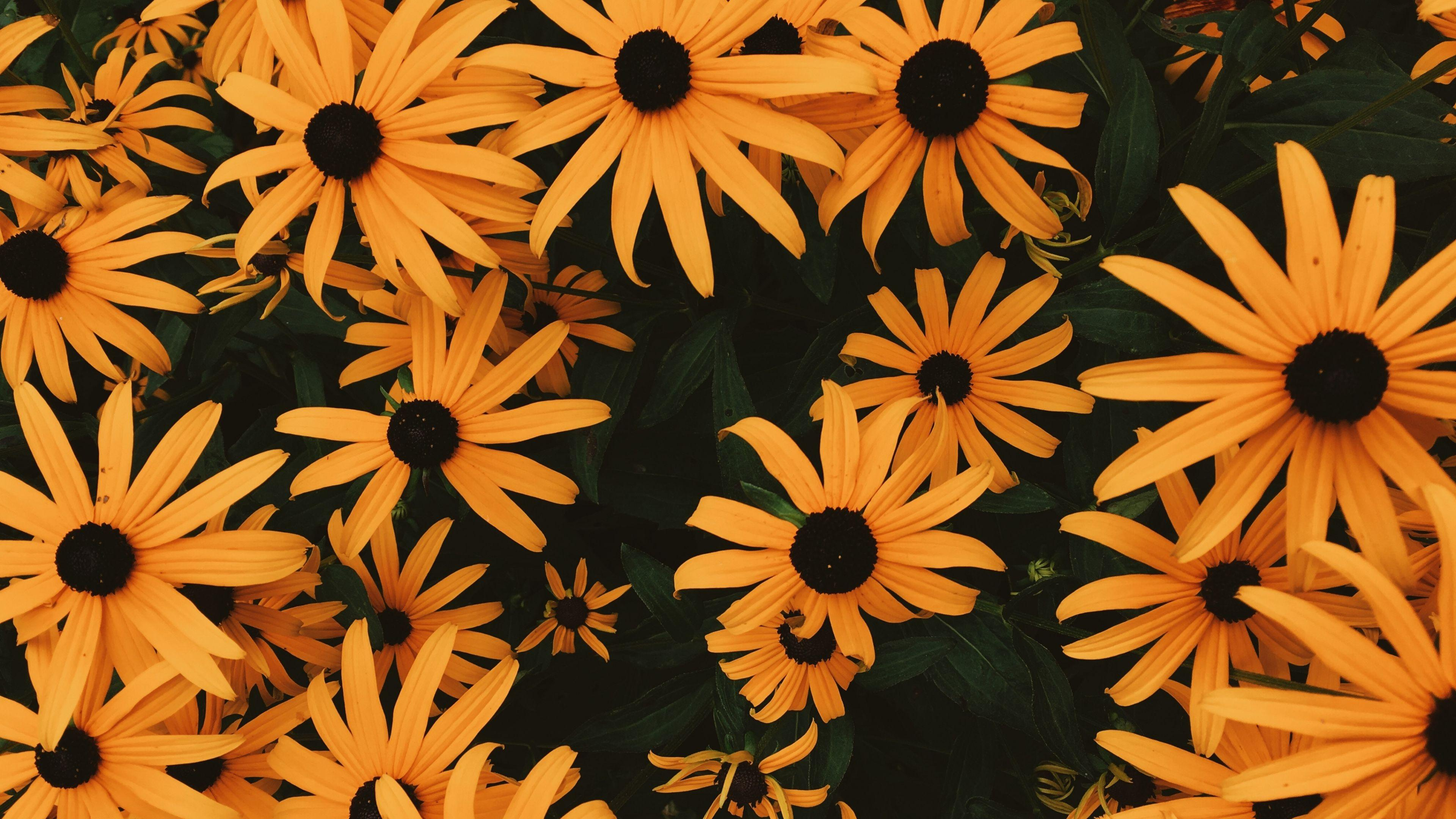 Wallpapers Coneflowers, Flowers, Flowerbed, Many