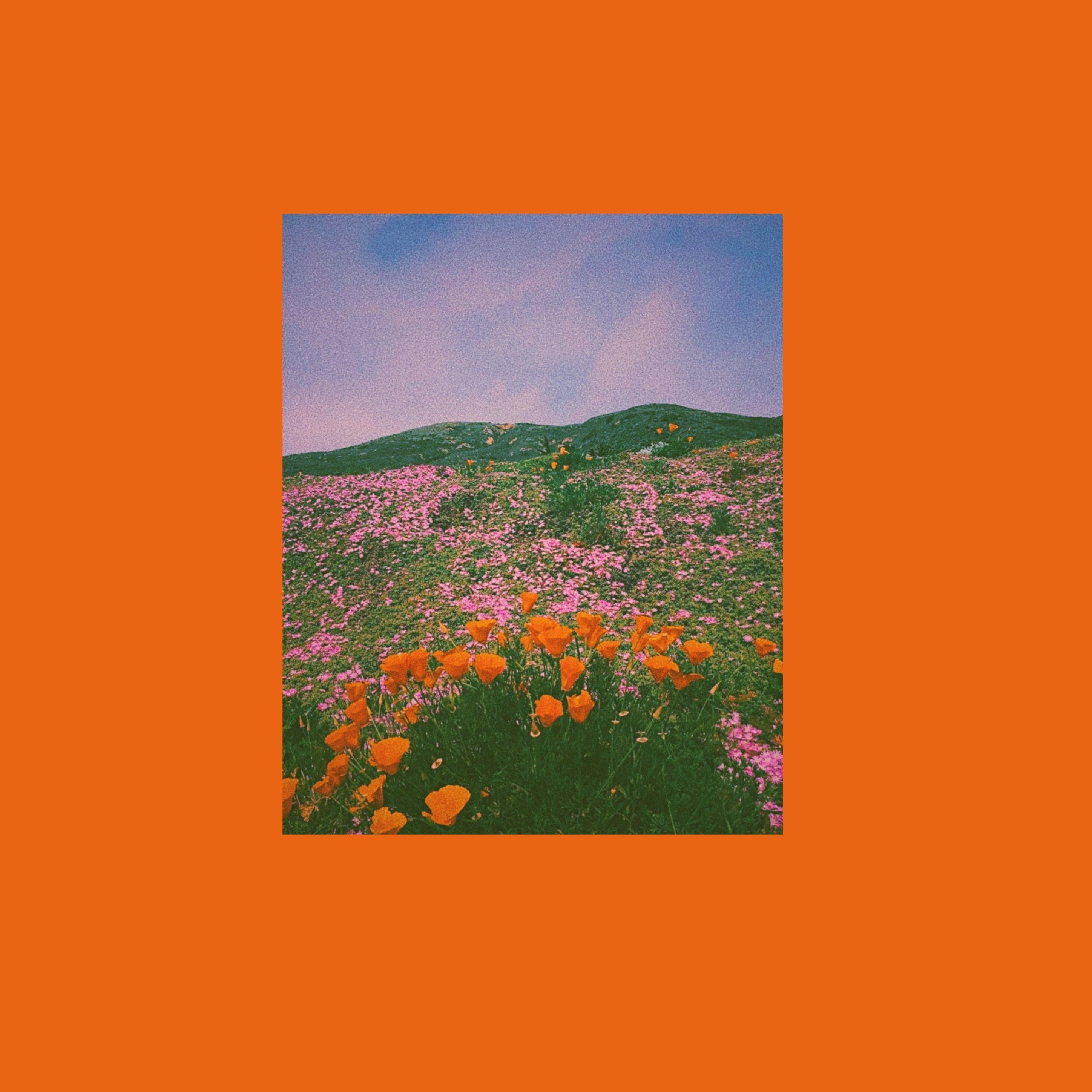 Artsy Orange Aesthetic Wallpapers