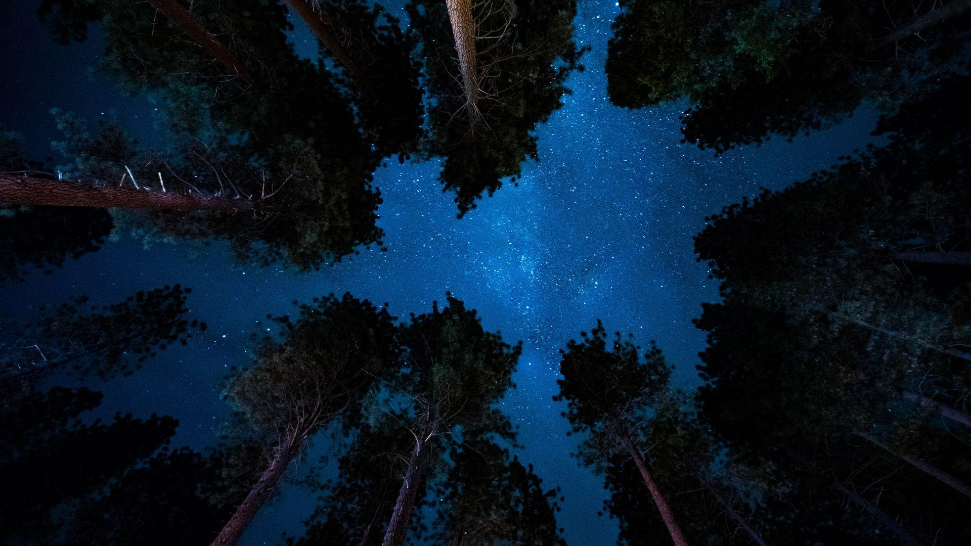 Forest Night Wallpapers Wallpaper Cave