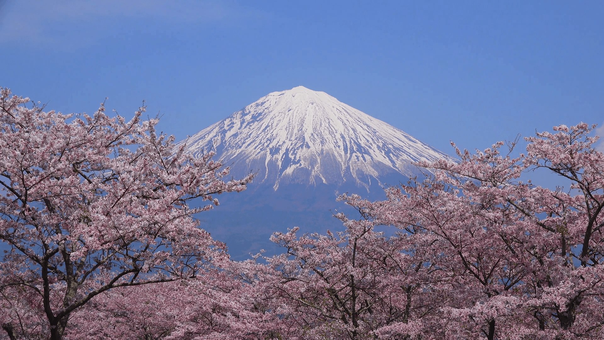 The Wonder Of Fuji Wallpapers Wallpaper Cave