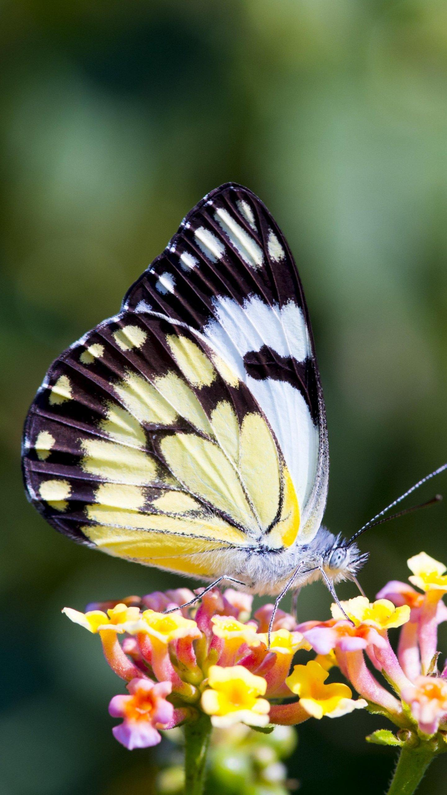 Butterfly On Flower Wallpapers - Wallpaper Cave