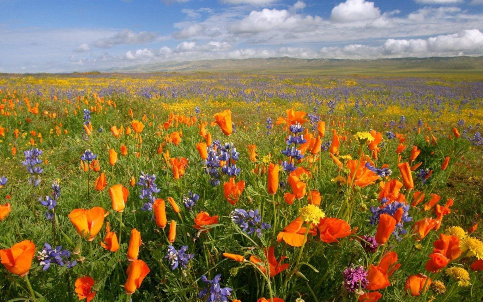 Wild Flowers In Meadow Wallpapers - Wallpaper Cave