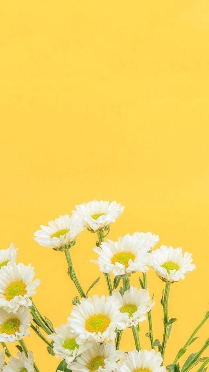 Download 64 Wallpaper Yellow Tumblr Hd Gambar Gratis