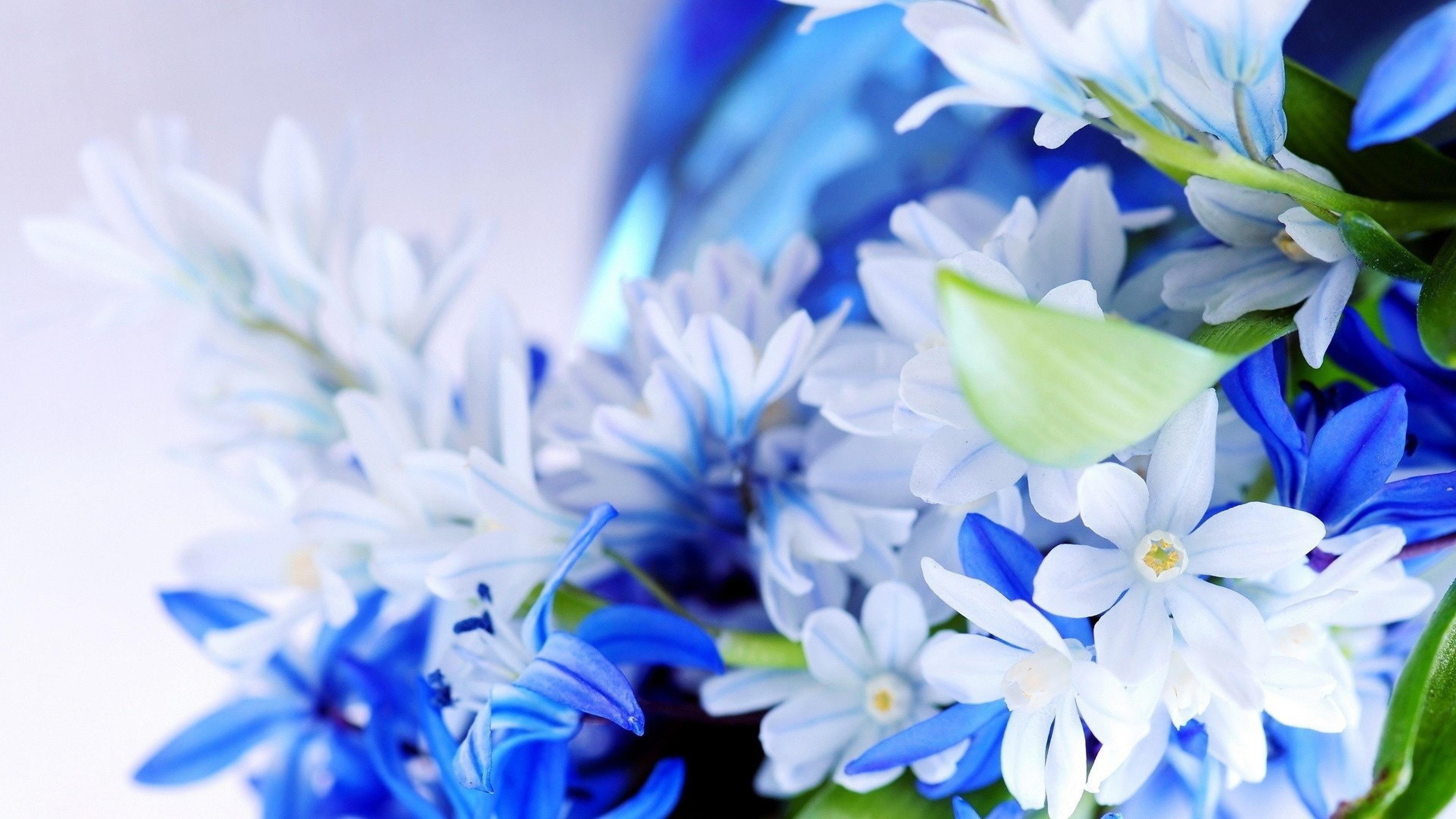 Flowers 4k Wallpapers - Wallpaper Cave