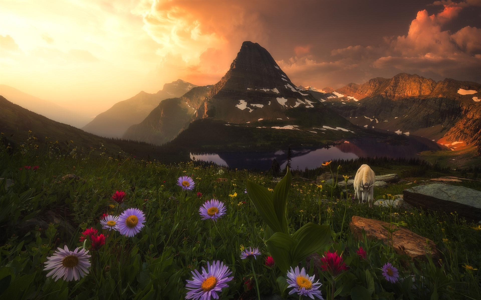 Wildflowers At Sunrise Wallpapers Wallpaper Cave