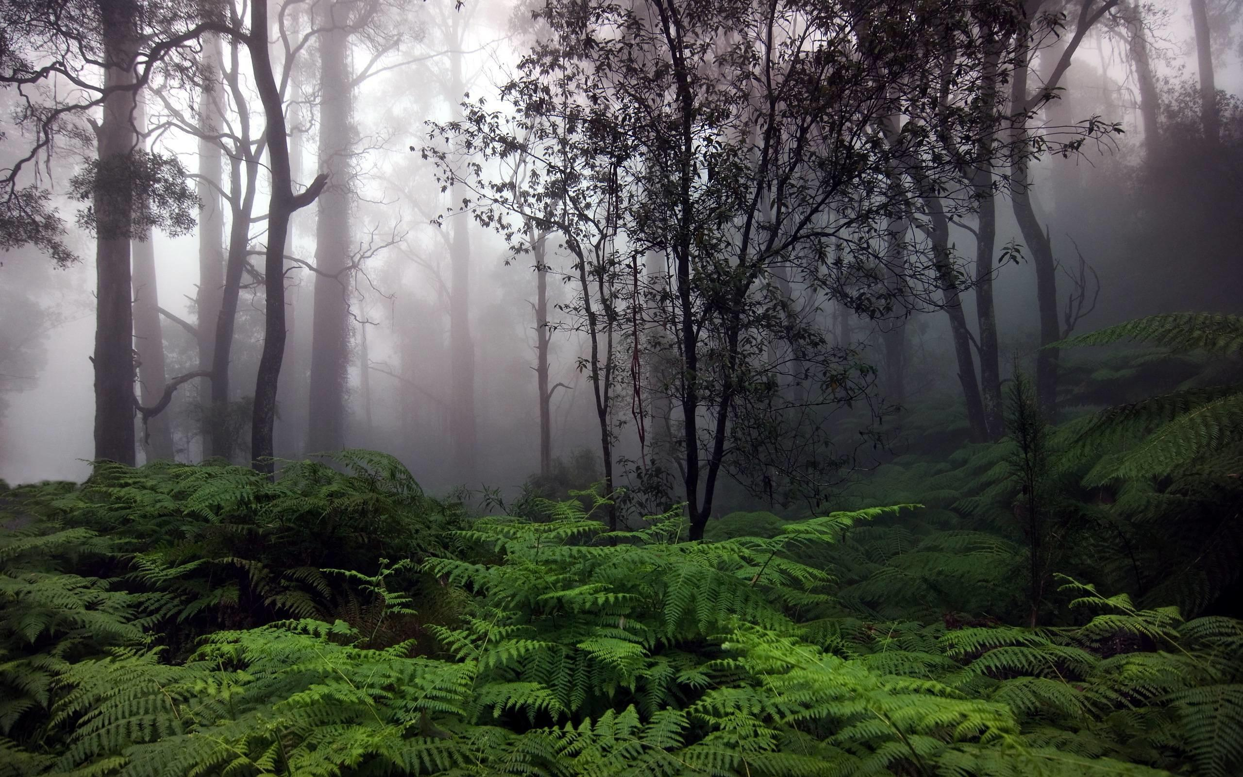 Forest Rain Wallpapers Wallpaper Cave