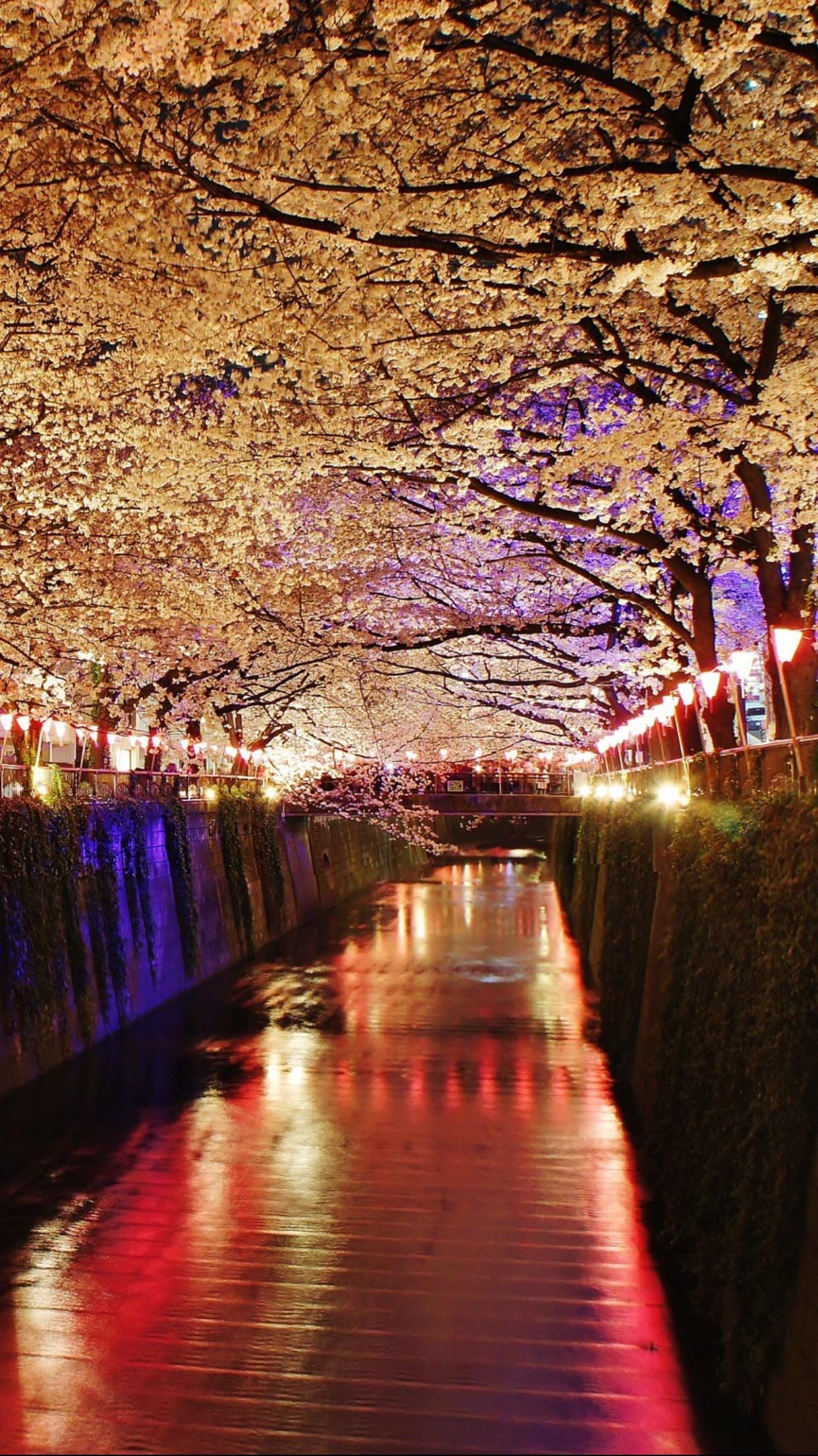 Sakura Night Wallpapers Wallpaper Cave