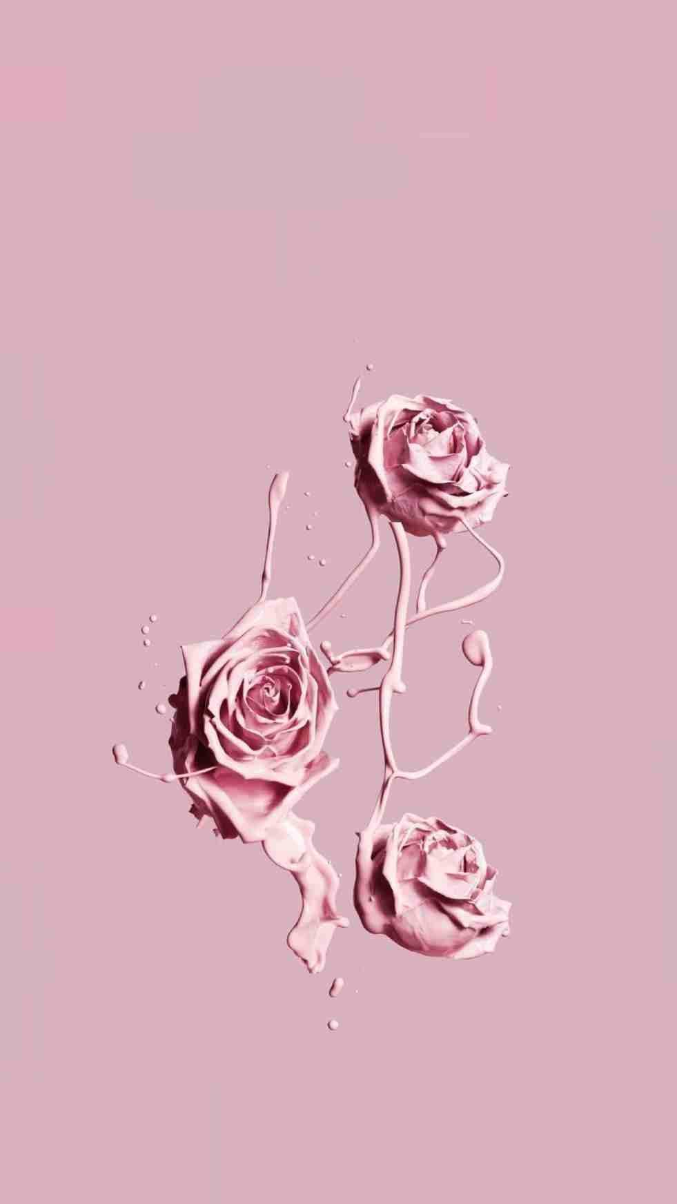 Rose Aesthetic Wallpapers Wallpaper Cave