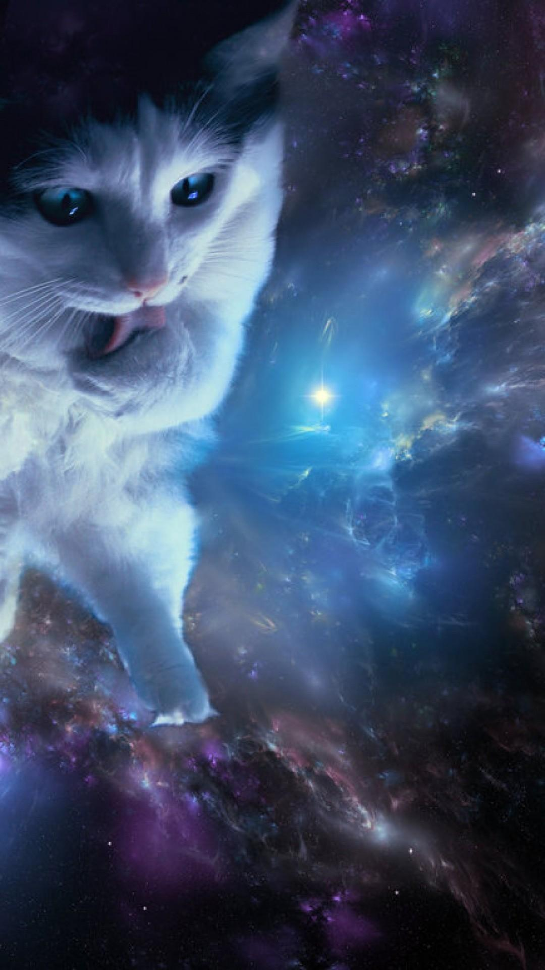 Space Cat Wallpapers Wallpaper Cave